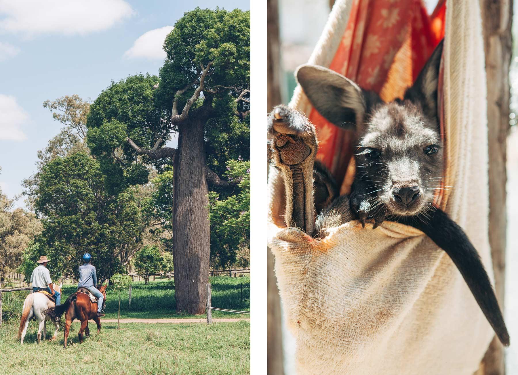 Myella Farm Stay, Australie