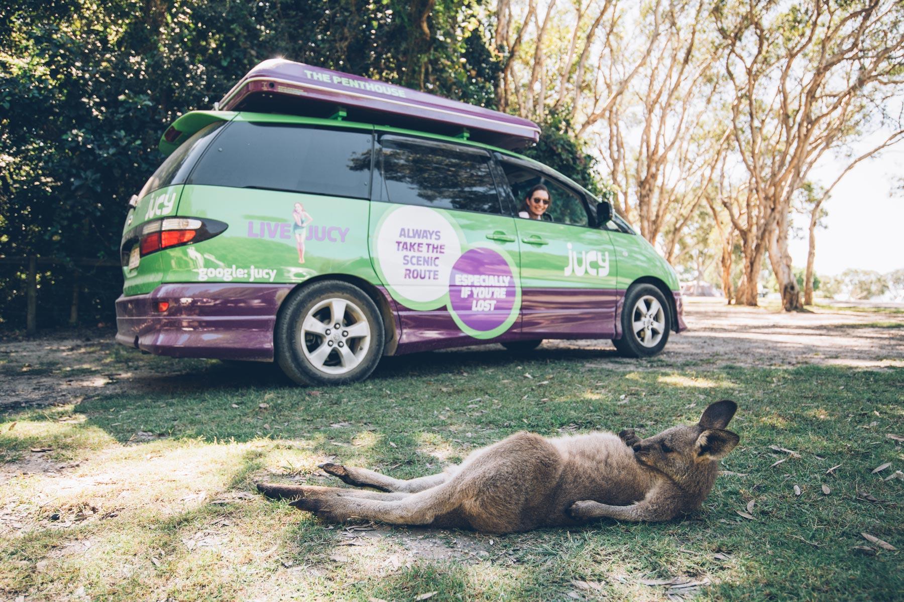 Kangourou Crowdy Bay NP, NSW
