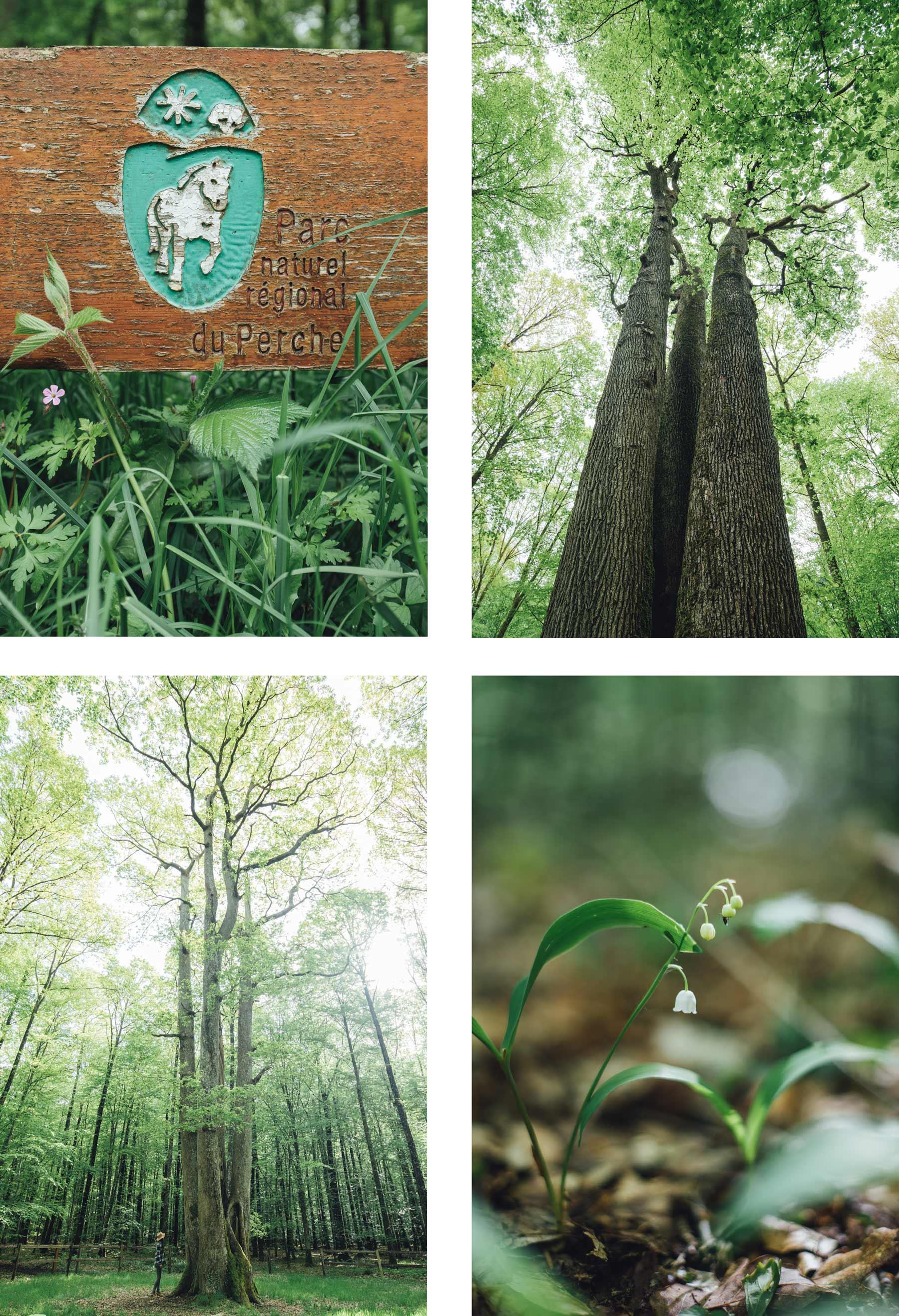 Forêt de Senonche, Perche, Eure et Loir