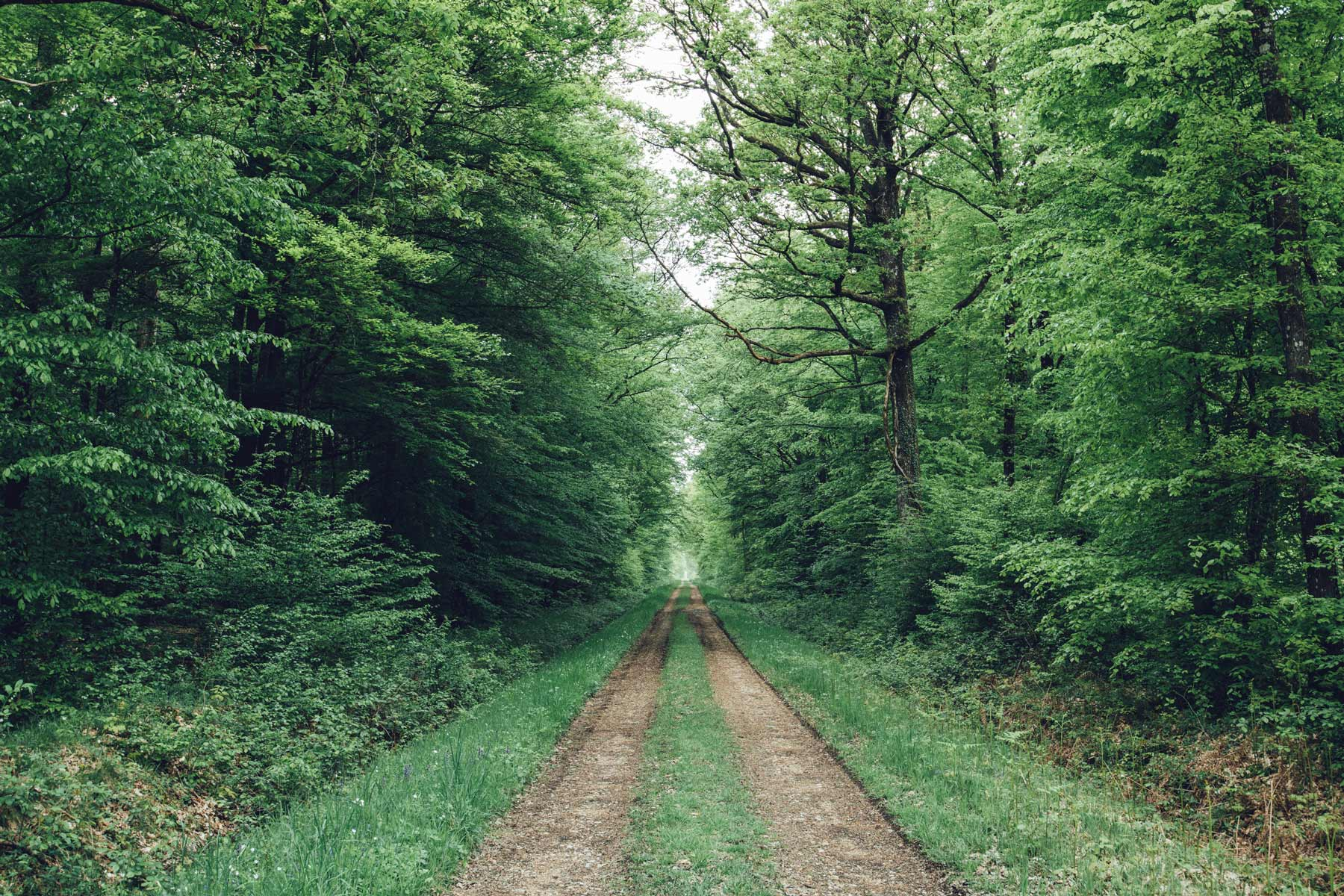 Le Perche, Forêt de Senonches