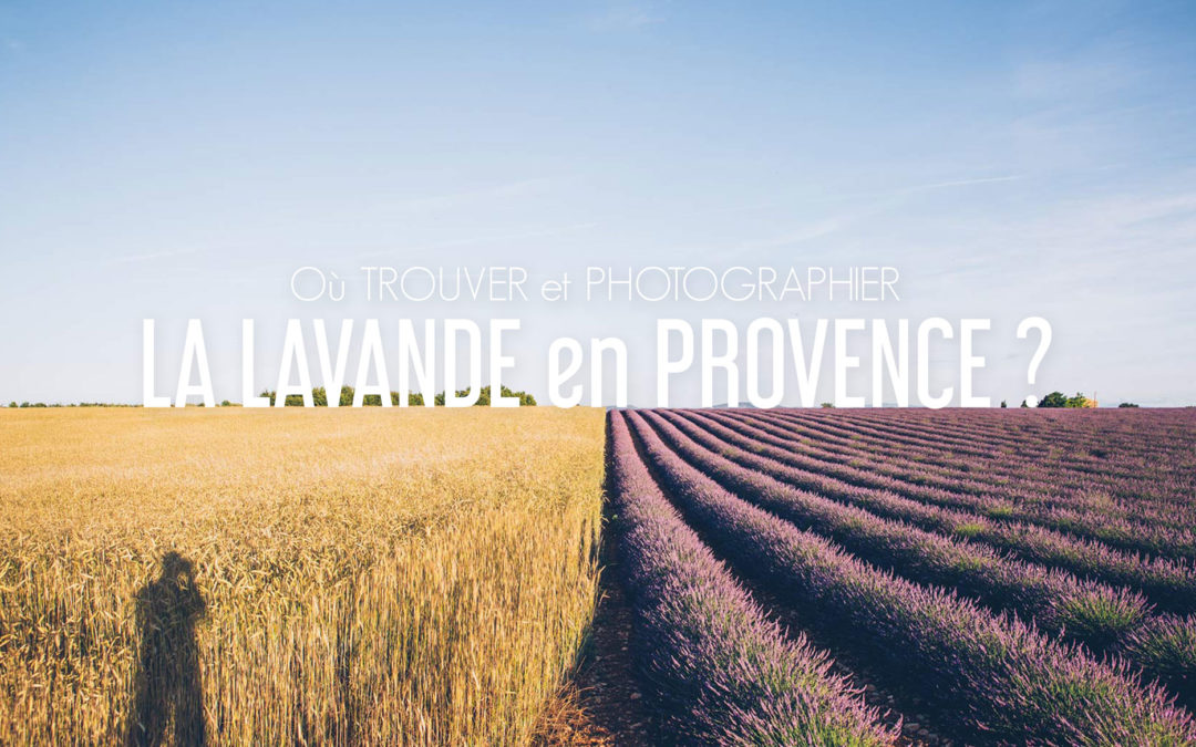 3 endroits où trouver et photographier la Lavande en Provence