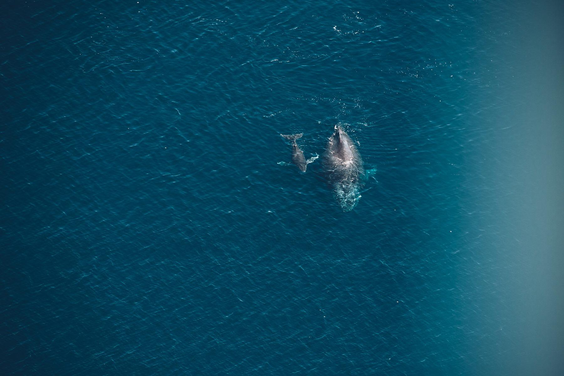 Baleines depuis les airs, Vol ULM avec TipTop, Mayotte