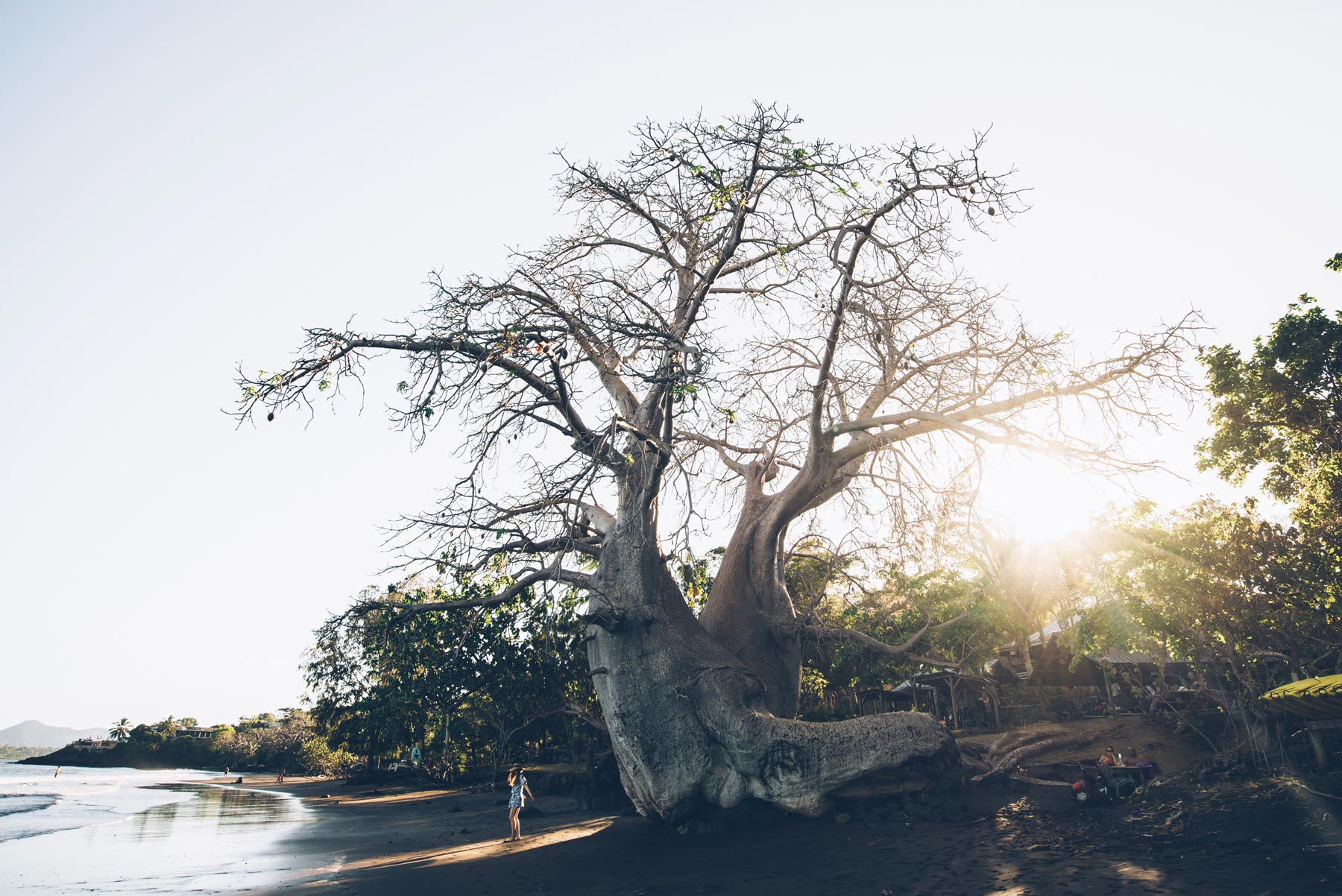 Baobab, plage Sakouli, Mayotte