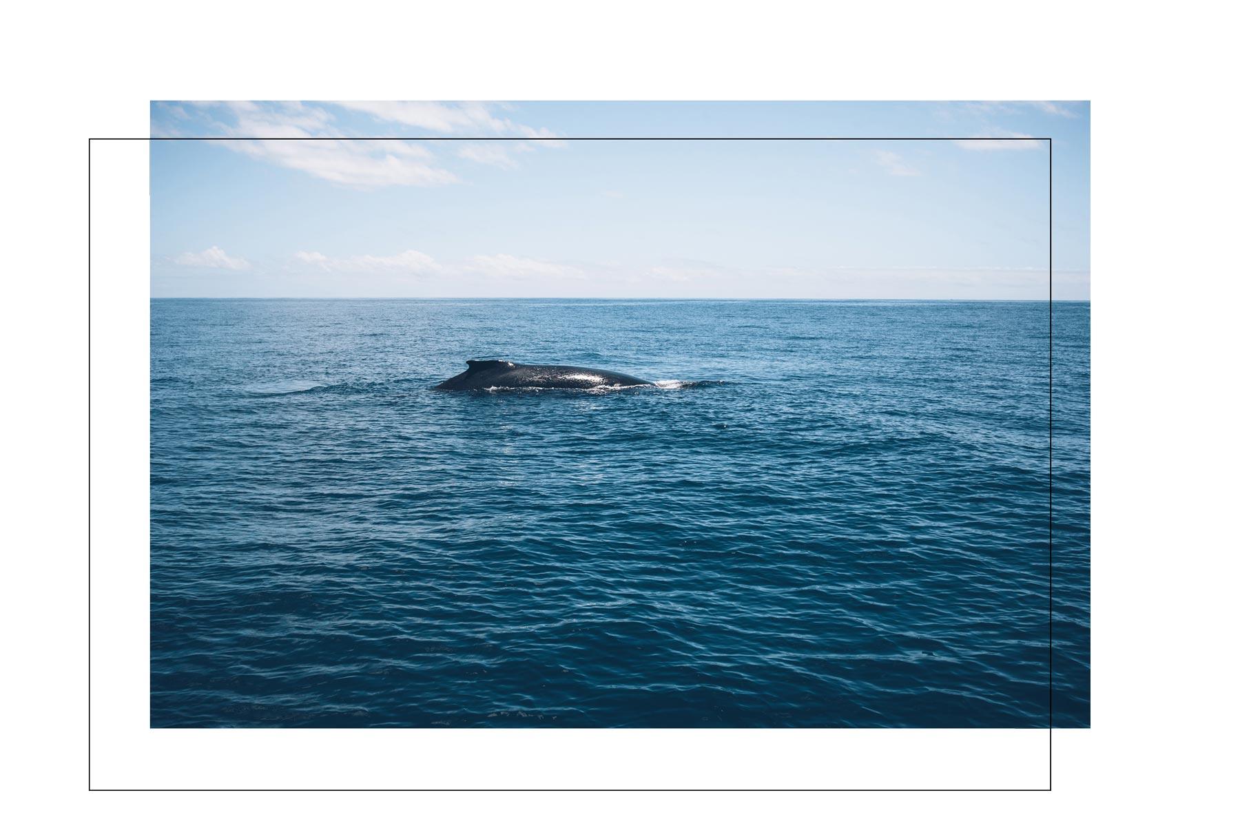 Voir les baleines à Mayotte