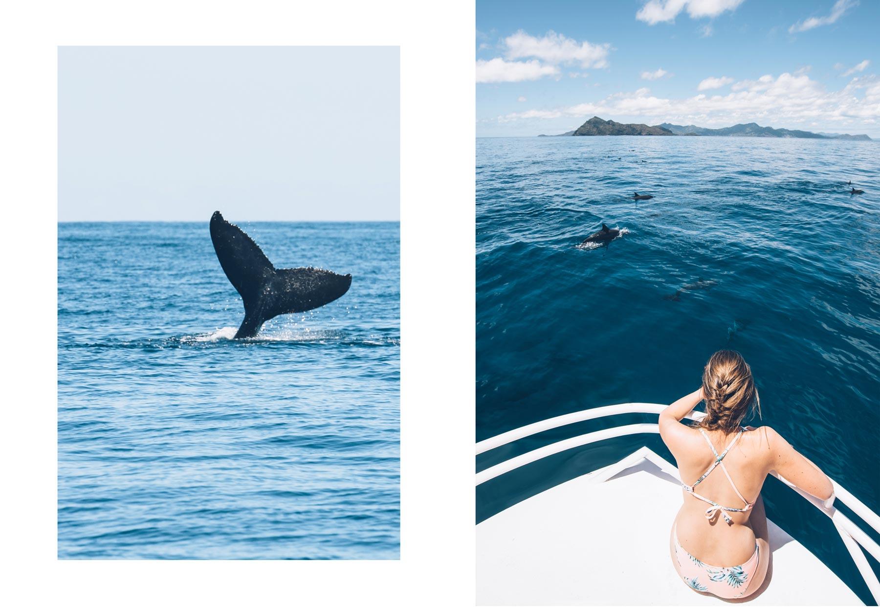 Sortie Baleine à Mayotte