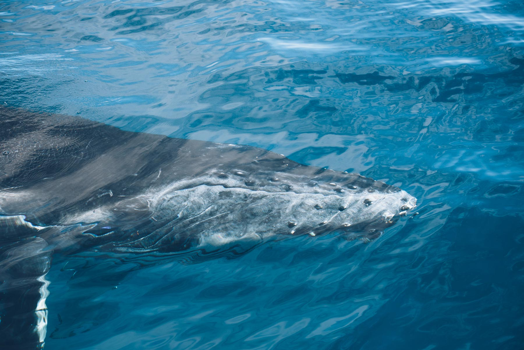Baleineau, Mayotte 2018