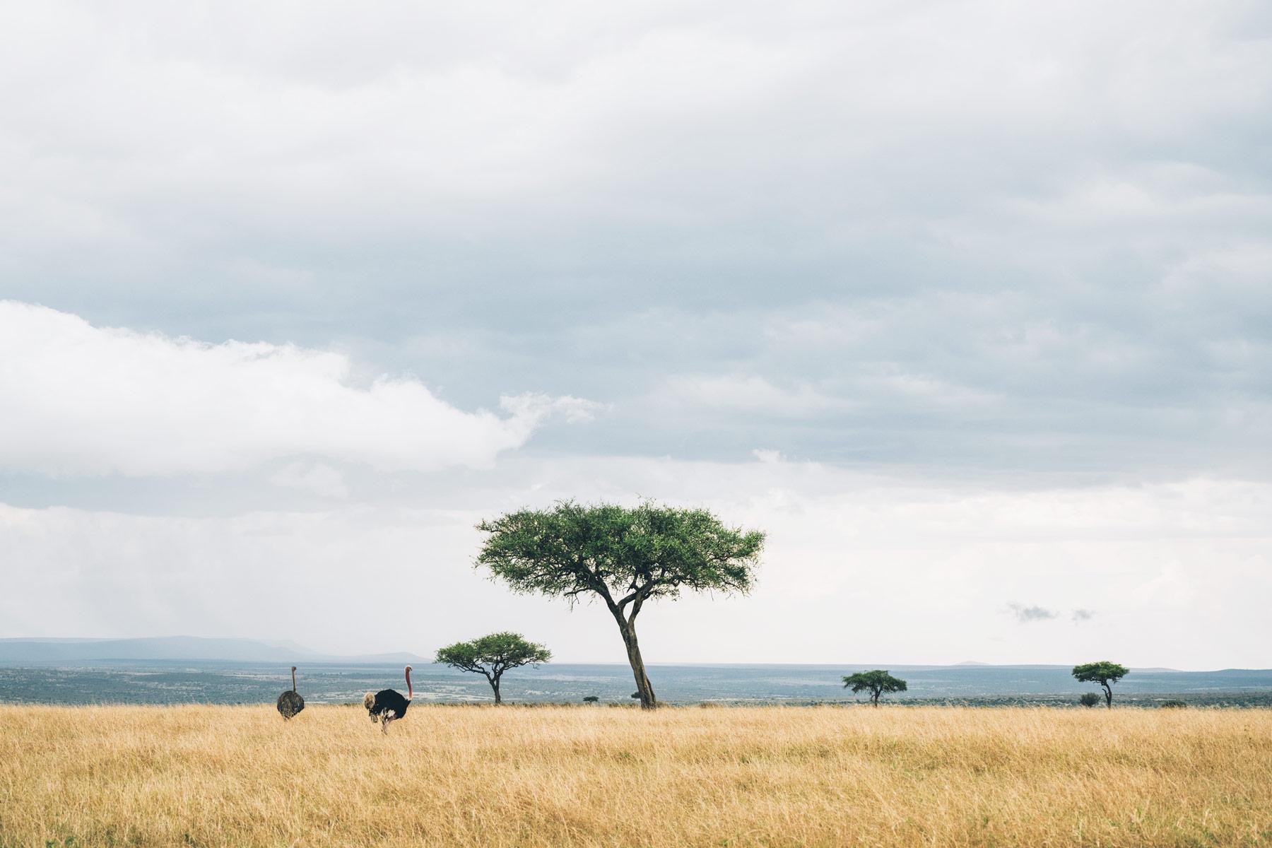 Kenya, Afrique