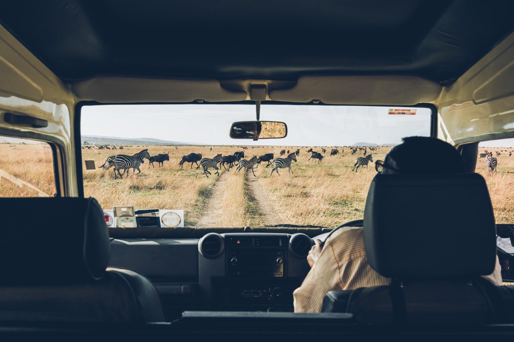 Migration Masai Mara, Kenya