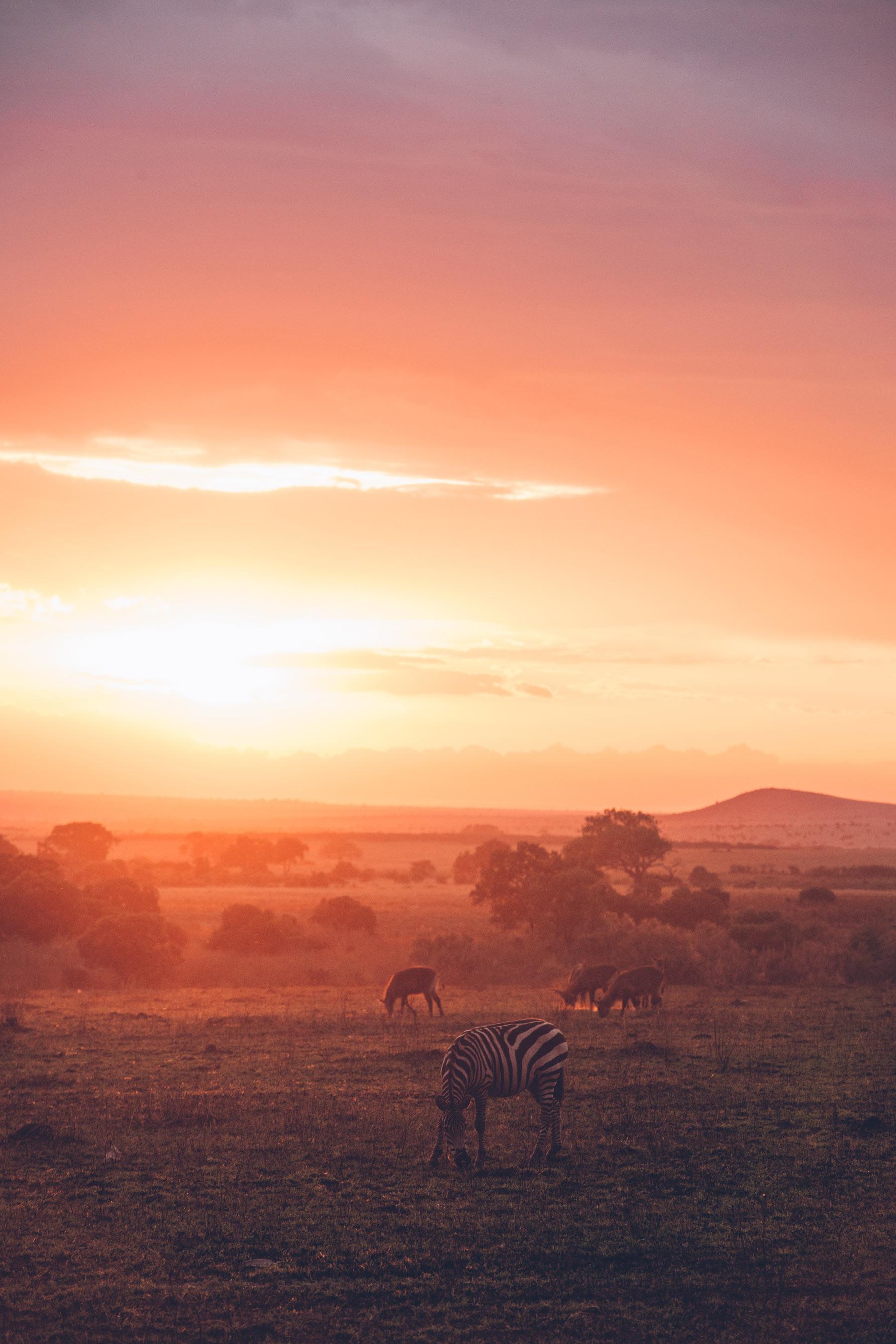 Masai Mara, Safari au Kenya