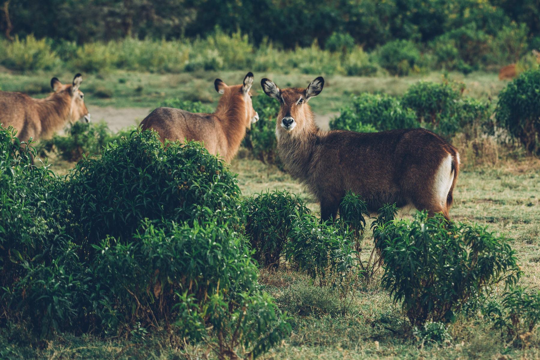 Kenya, Blog Voyage