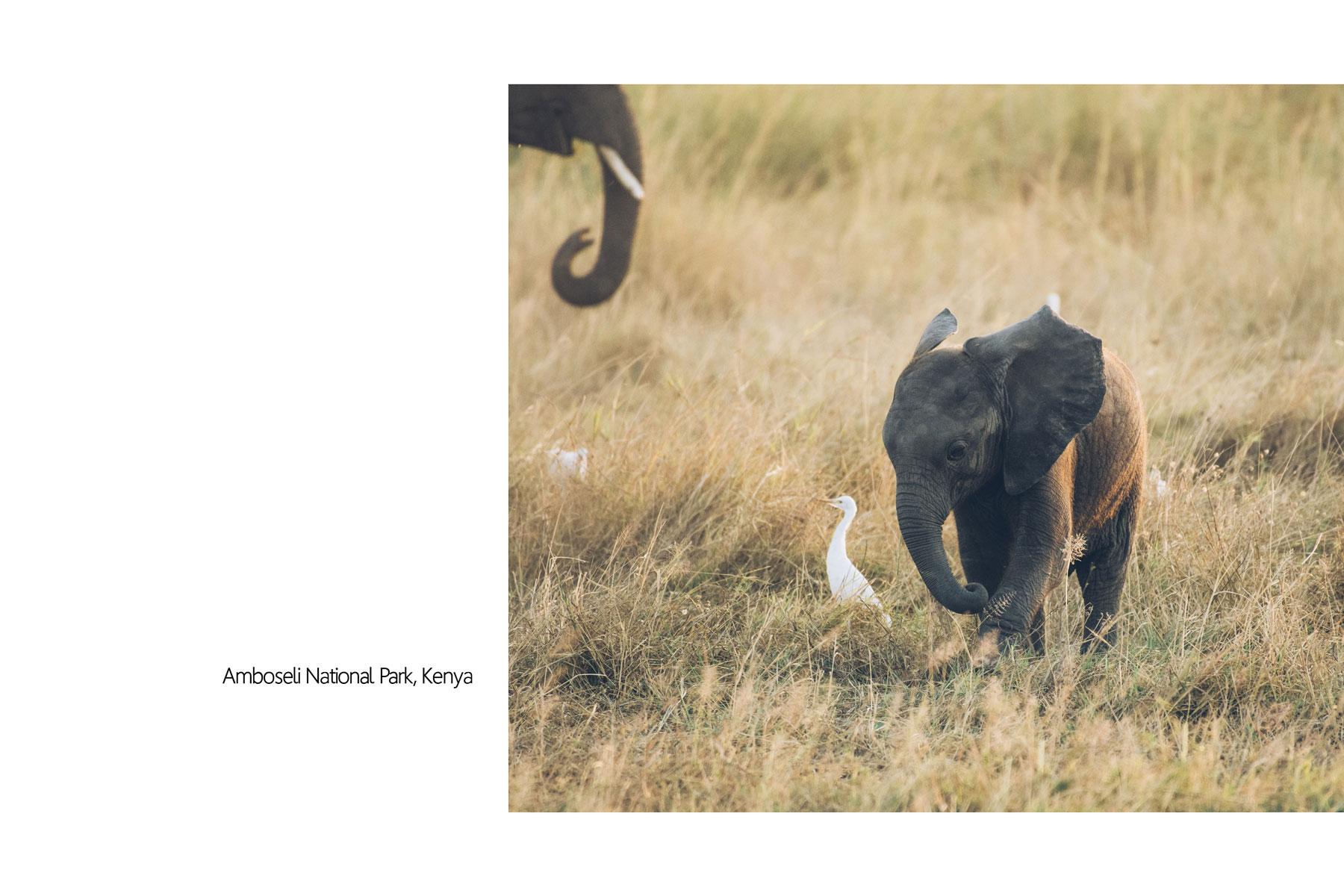 Eléphanteau, Parc National Amboseli, Kenya