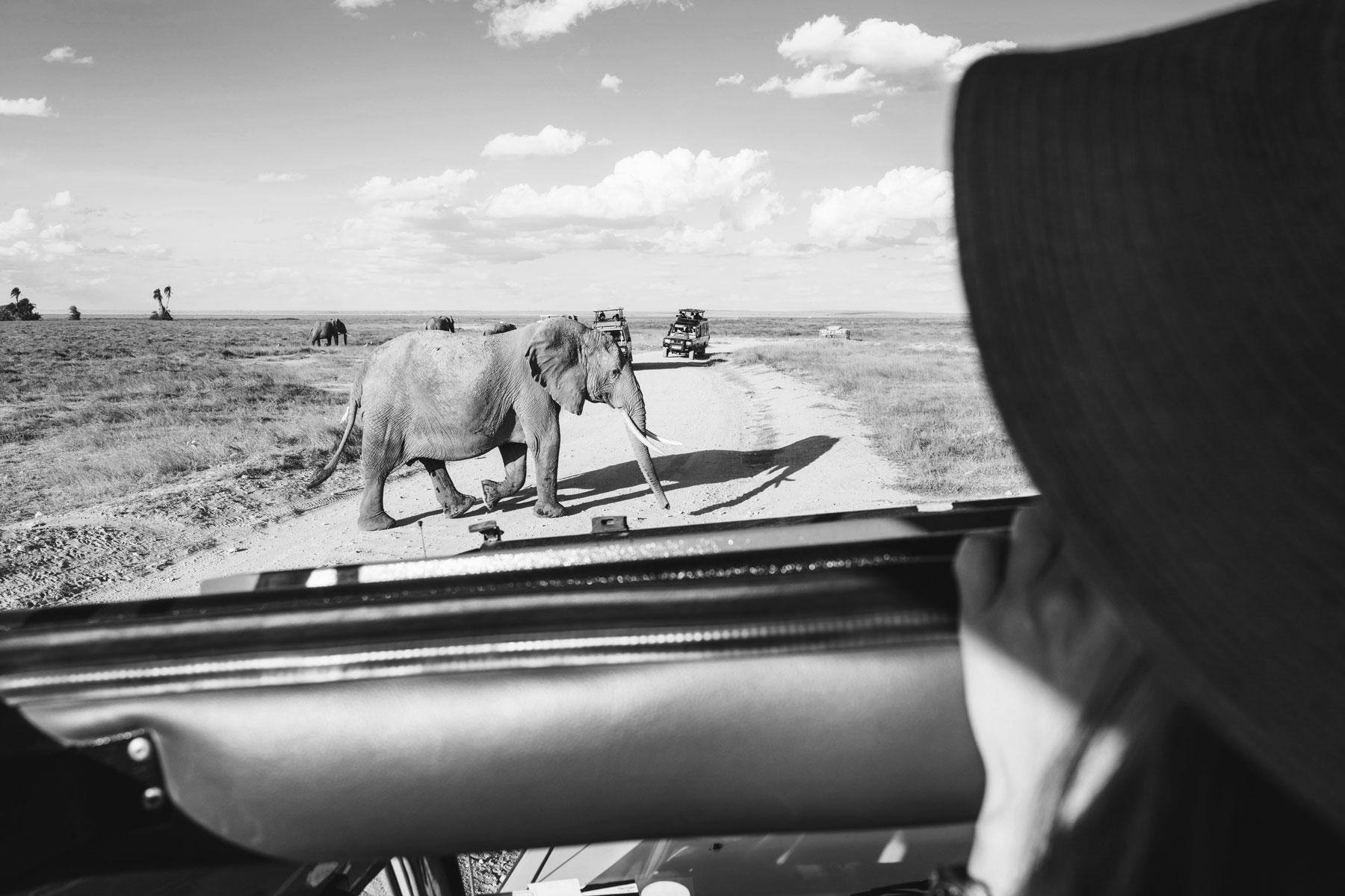 Safari éléphants, Amboseli, Kenya