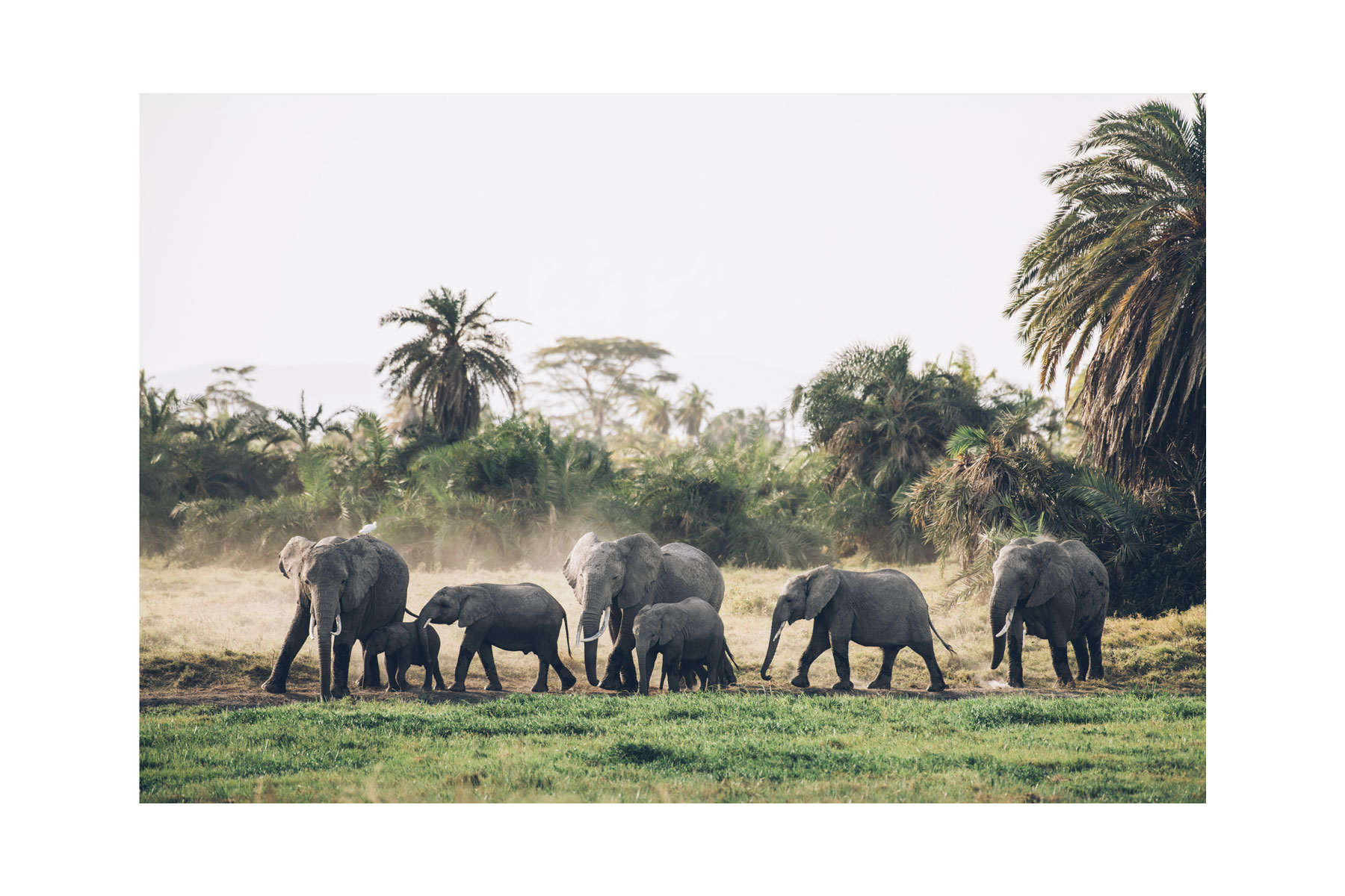 Eléphants, Parc National Amboseli, Kenya