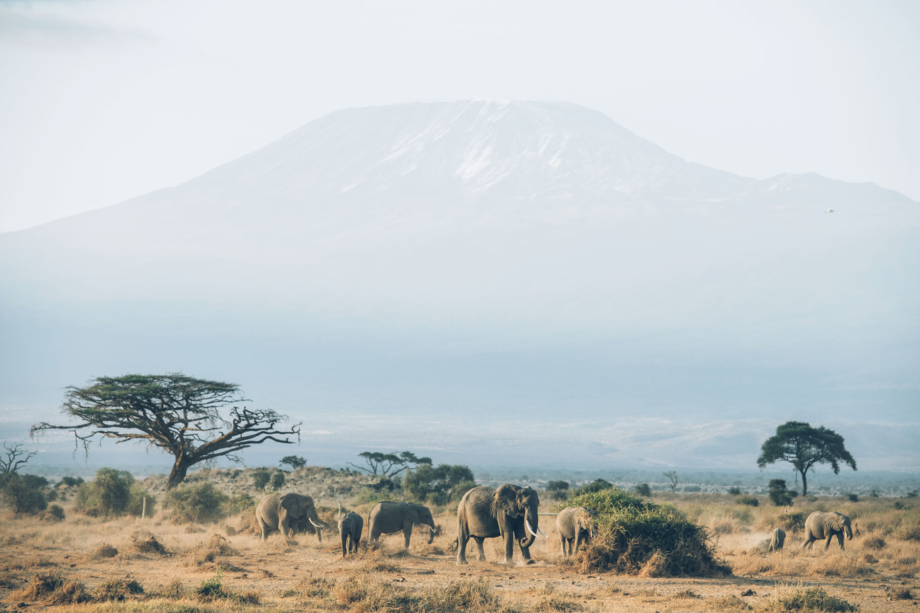 Eléphants devant le Kilimandjaro, Parc National Amboseli, Kenya