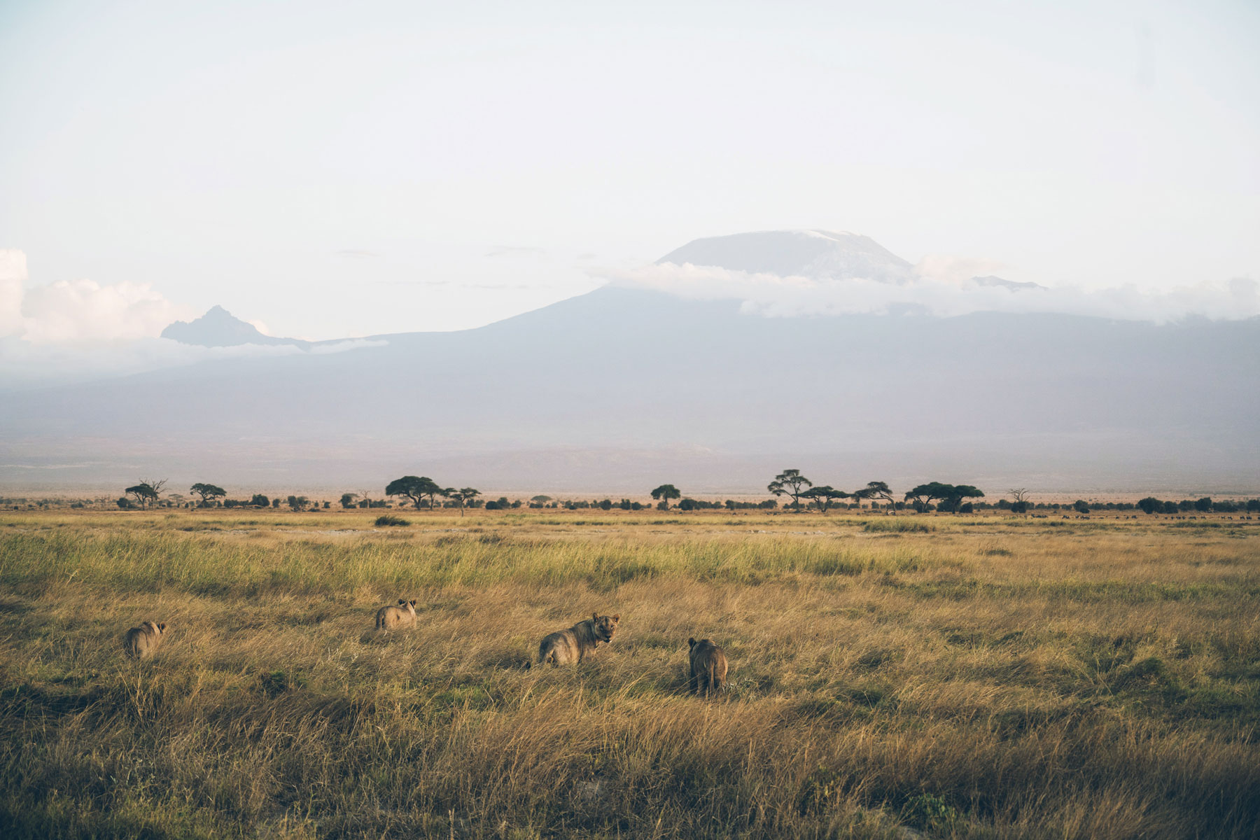Safari, Parc National Amboseli, Kenya