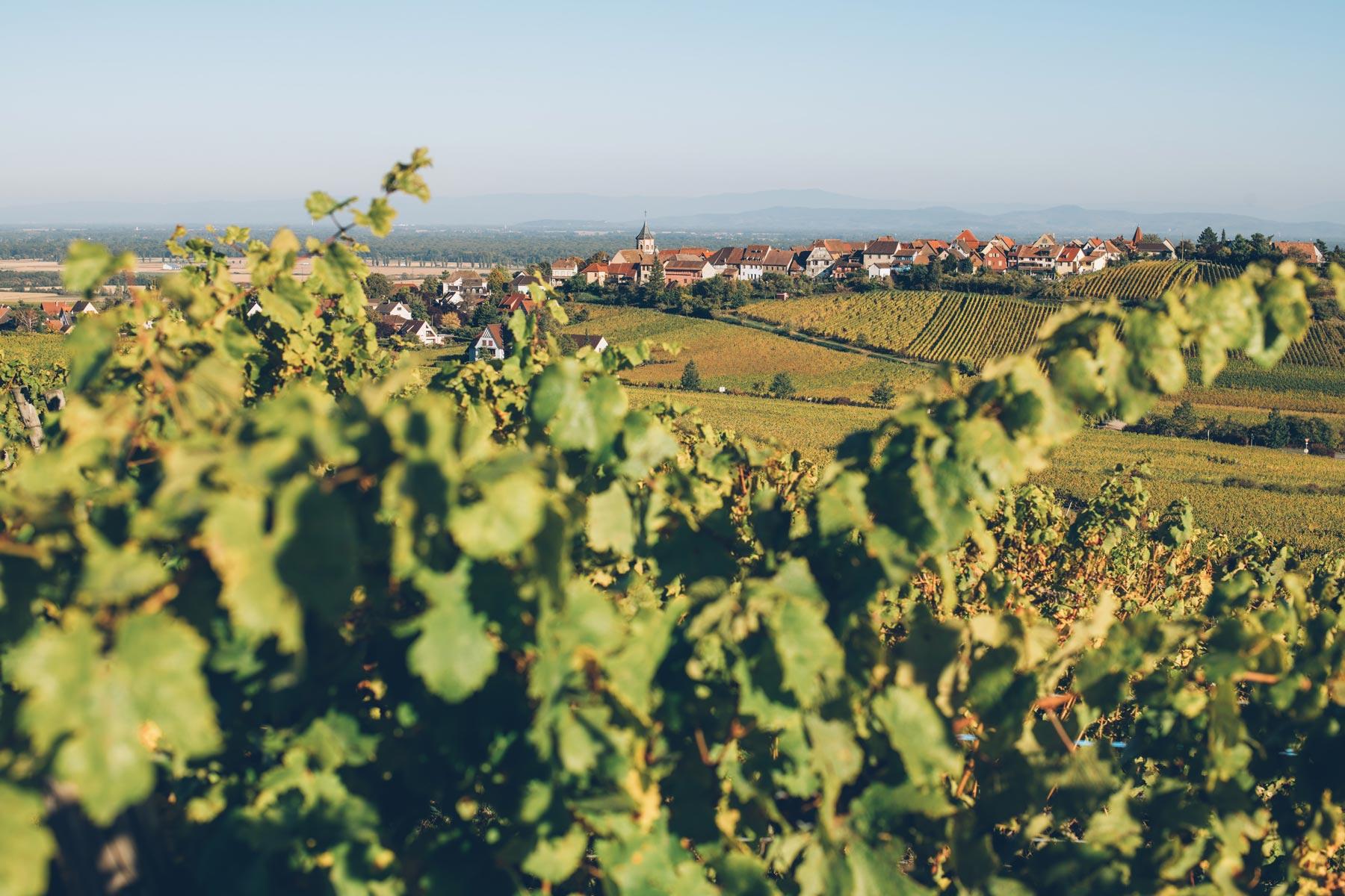 Zellenberg, Alsace