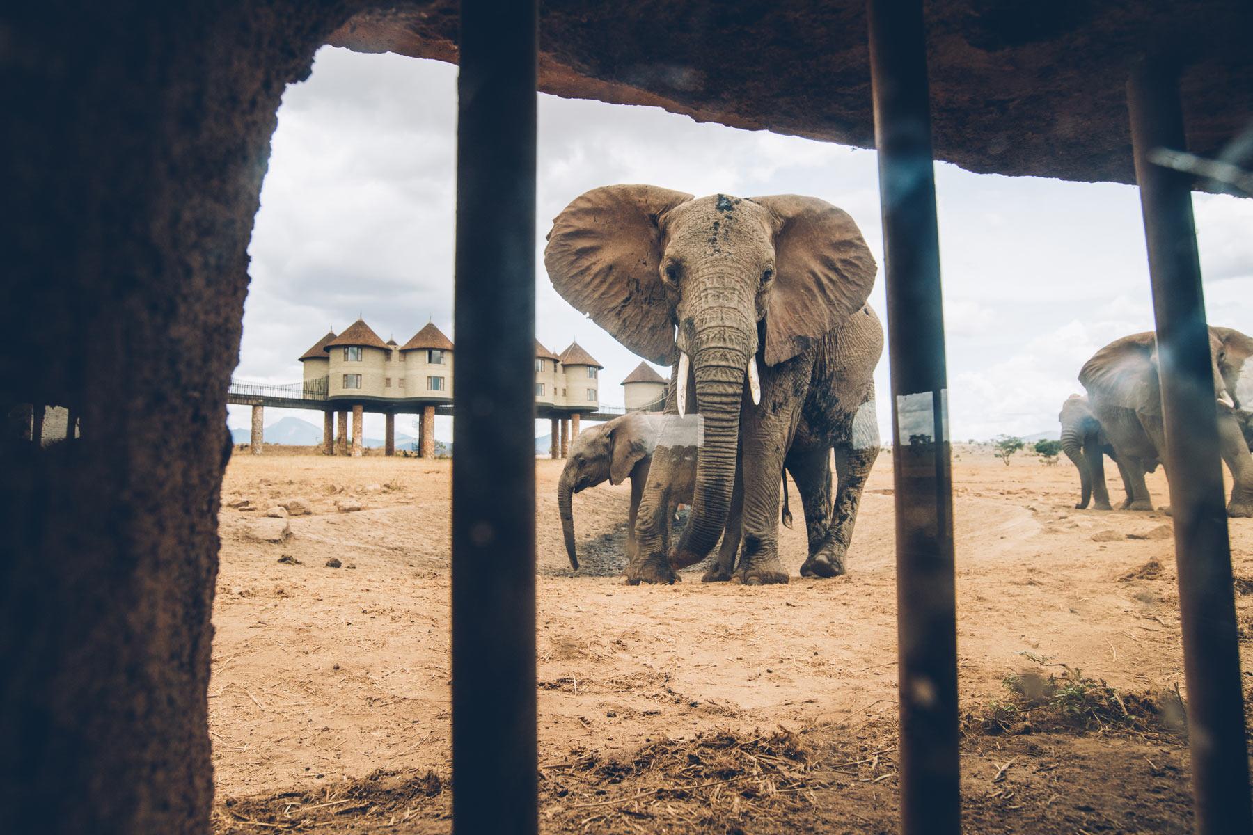 Hotel aux éléphants, Kenya