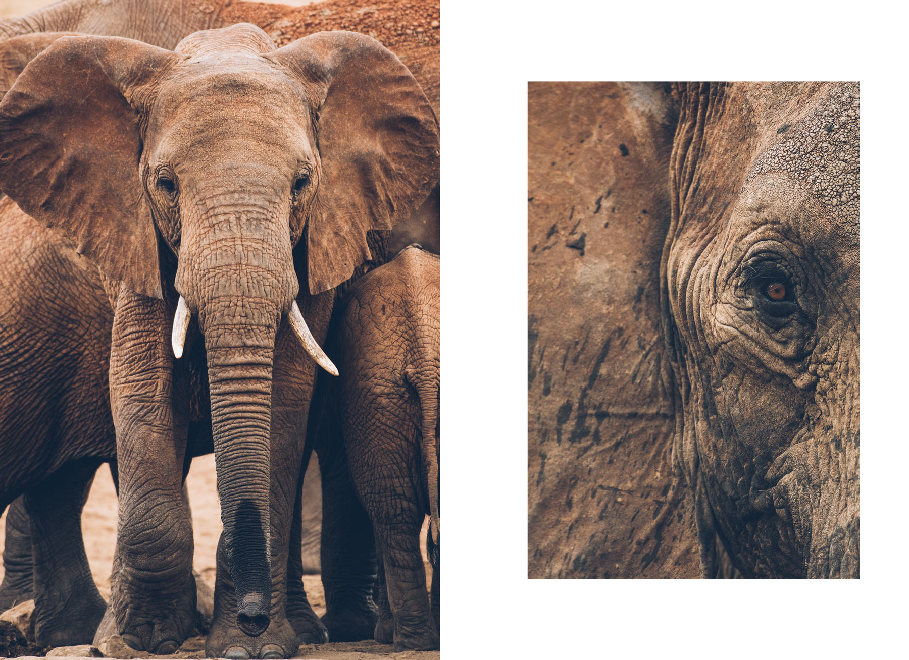 Safari Kenya, Blog Voyage