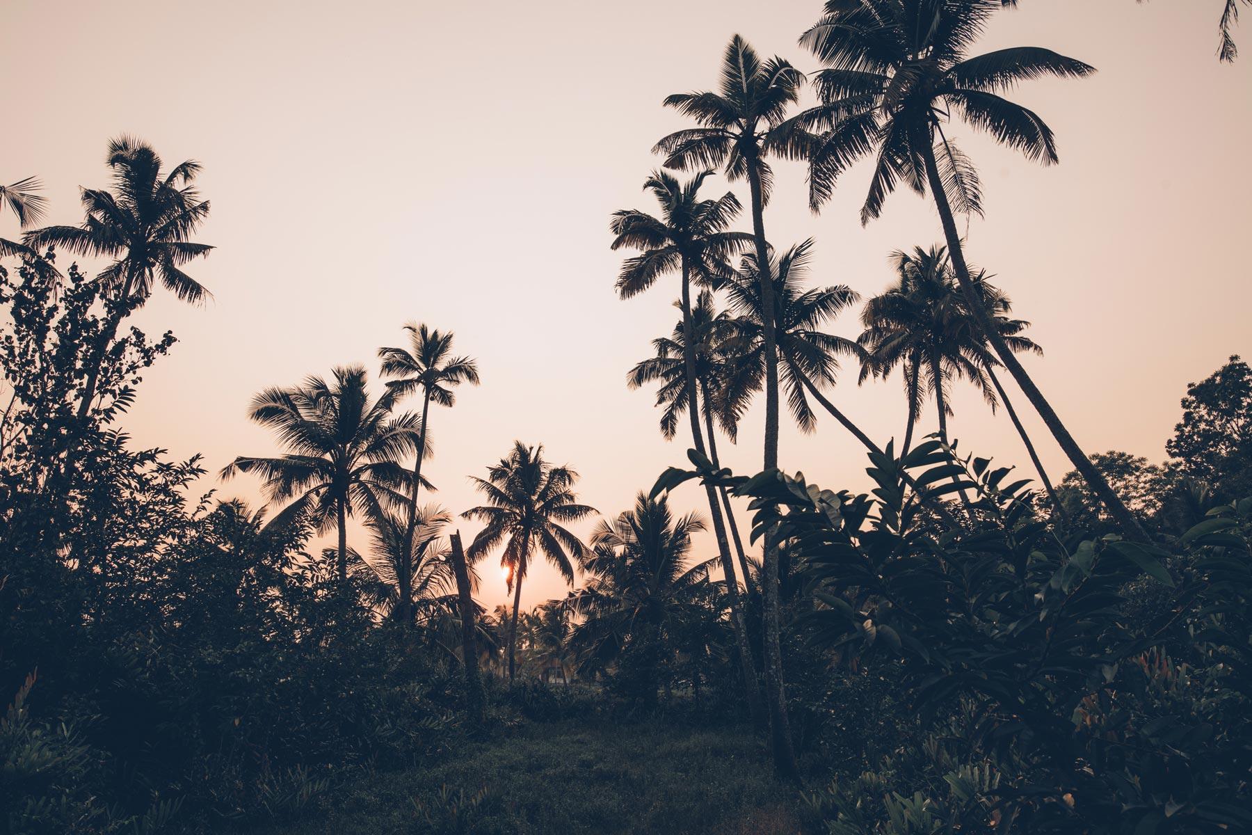Inde, Kerala, Blog Voyage