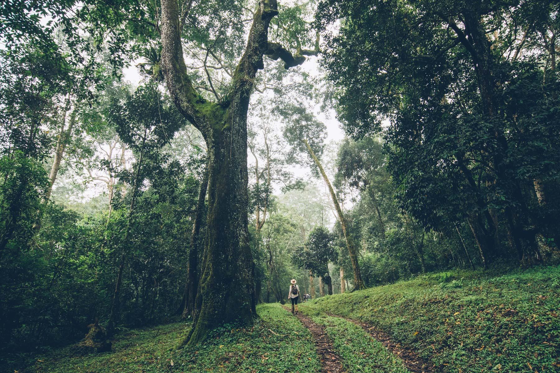 Parc National de Peyriar, Inde