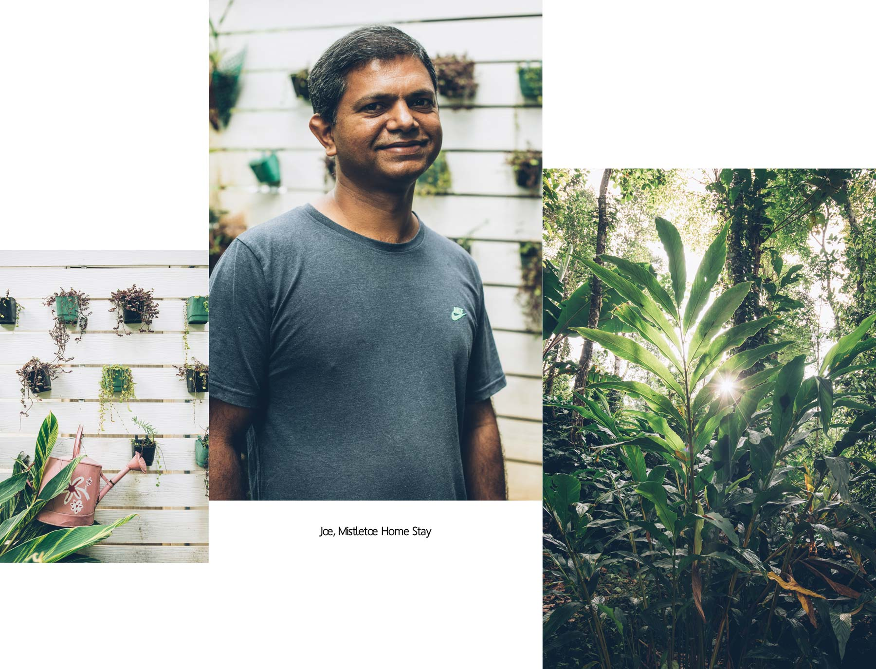Joe, Mistletoe Home Stay Munnar