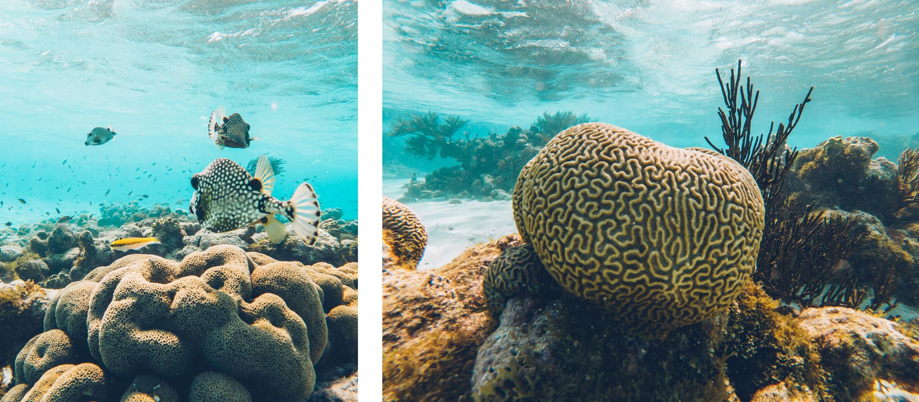 Snorkeling Grenadines, Tobago cays