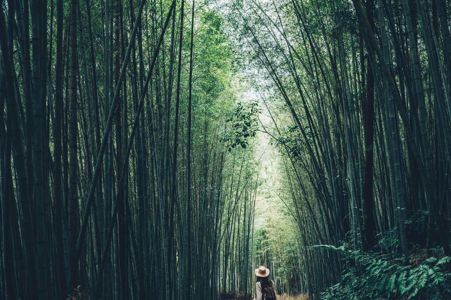 Tunnel de Bamboo à Taiwan