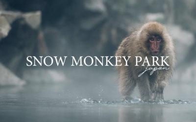 JAPON | VOIR LES SINGES AU SNOW MONKEY PARK VAUT-IL LE DETOUR?