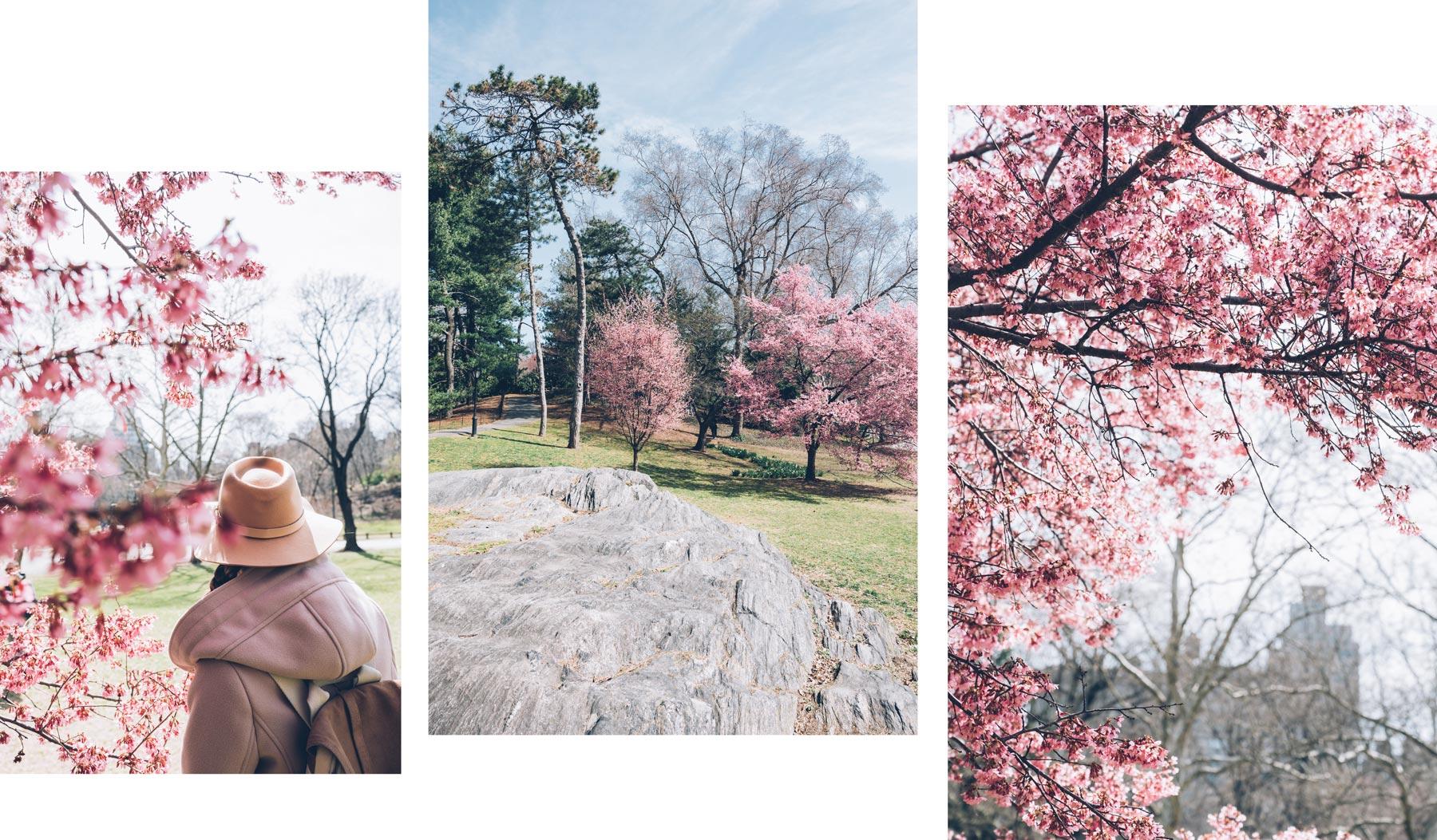Central Park en Avril, floraison des cerisiers