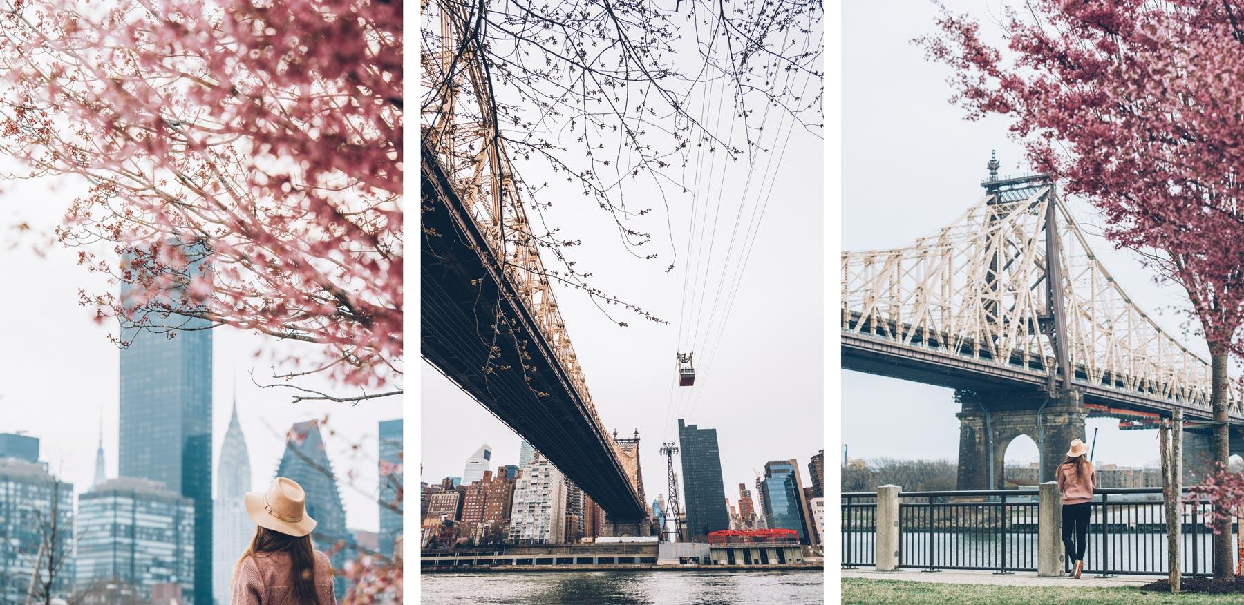 Roosevelt Island, New York, Cerisiers en fleur