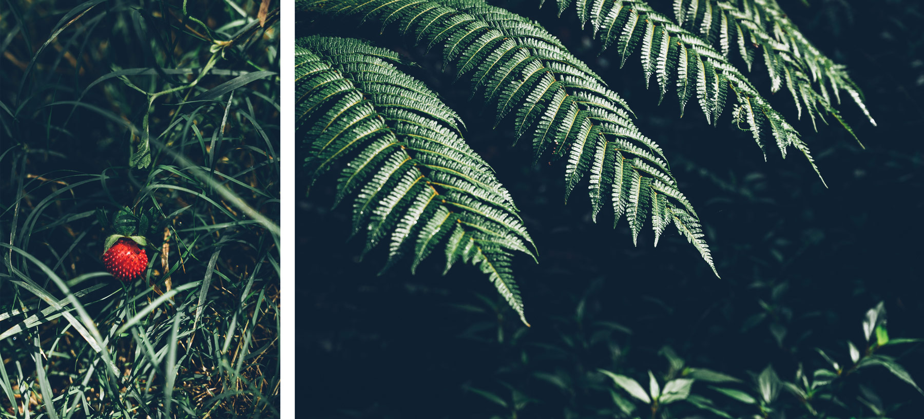 Végétation Mafate, Blog