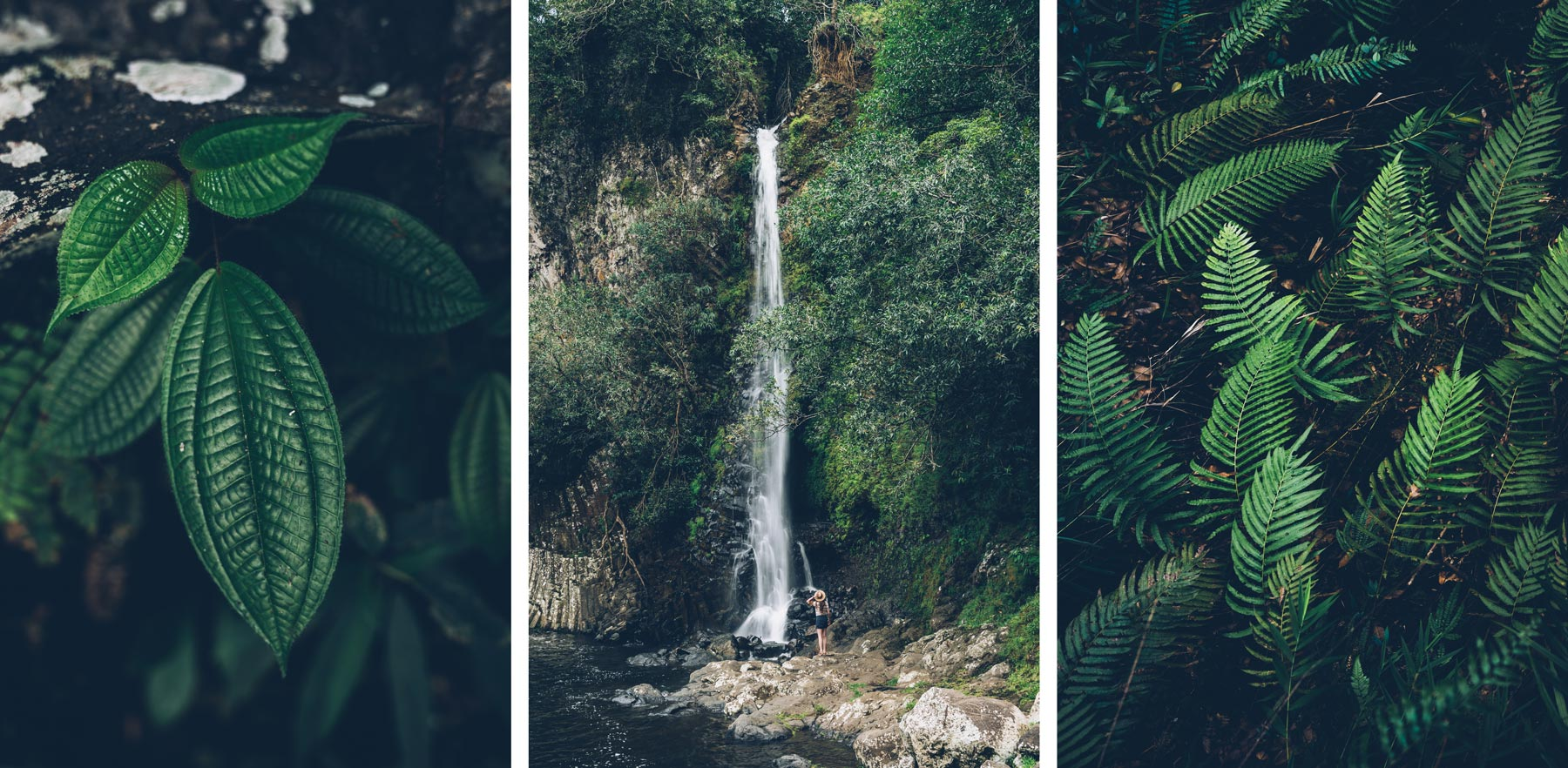Bassin la Paix, La Réunion