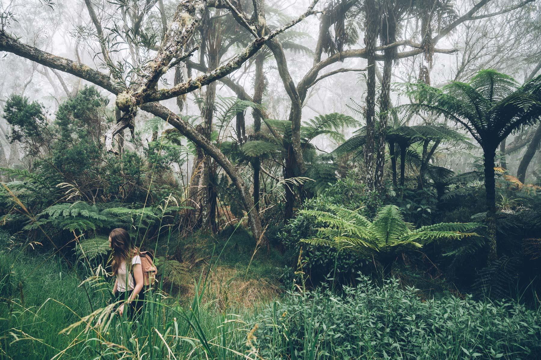 Forêt Tropicale La Réunion