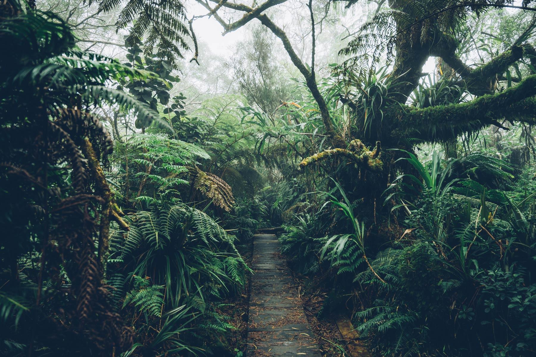 Randonnée pour le trou de fer, Belouve, La Réunion