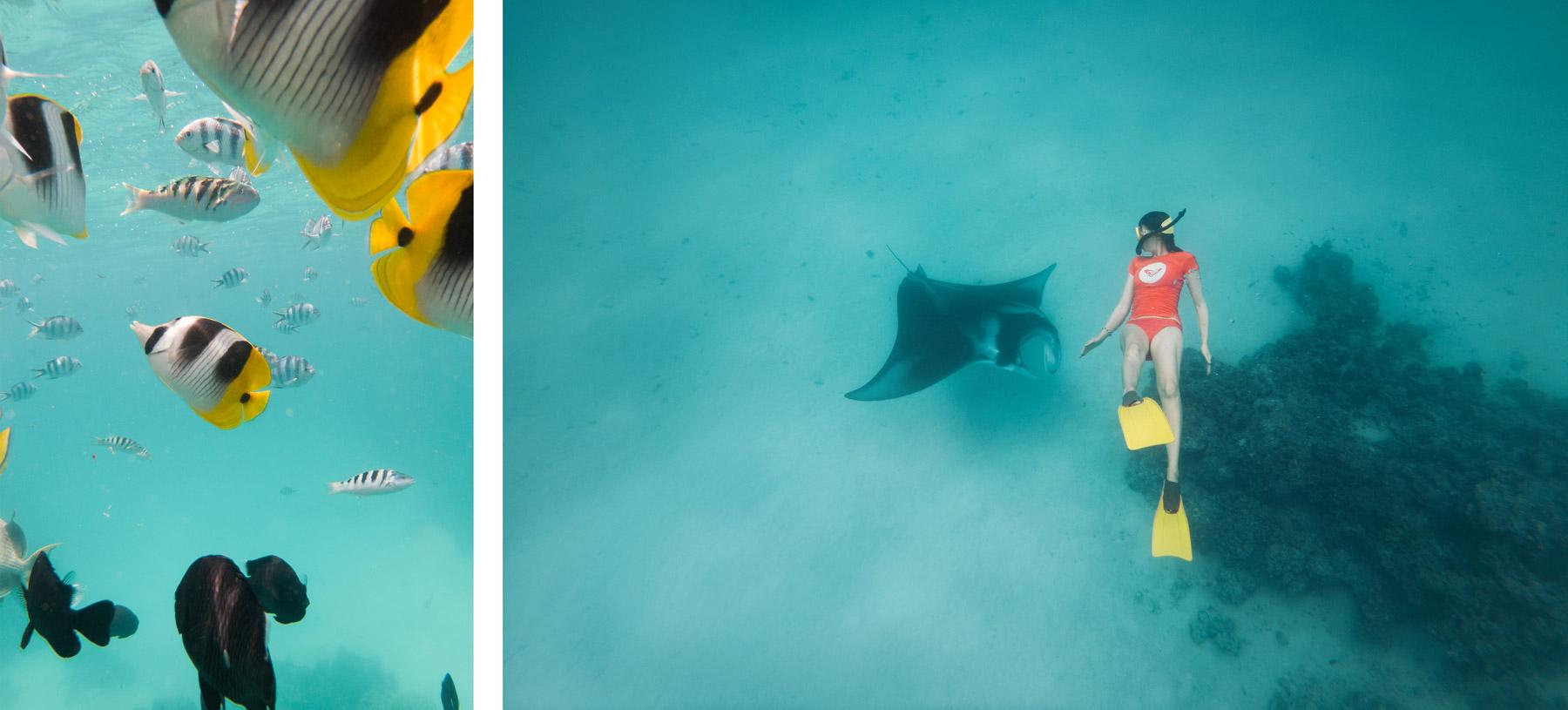 Snorkeling, Polynésie Française