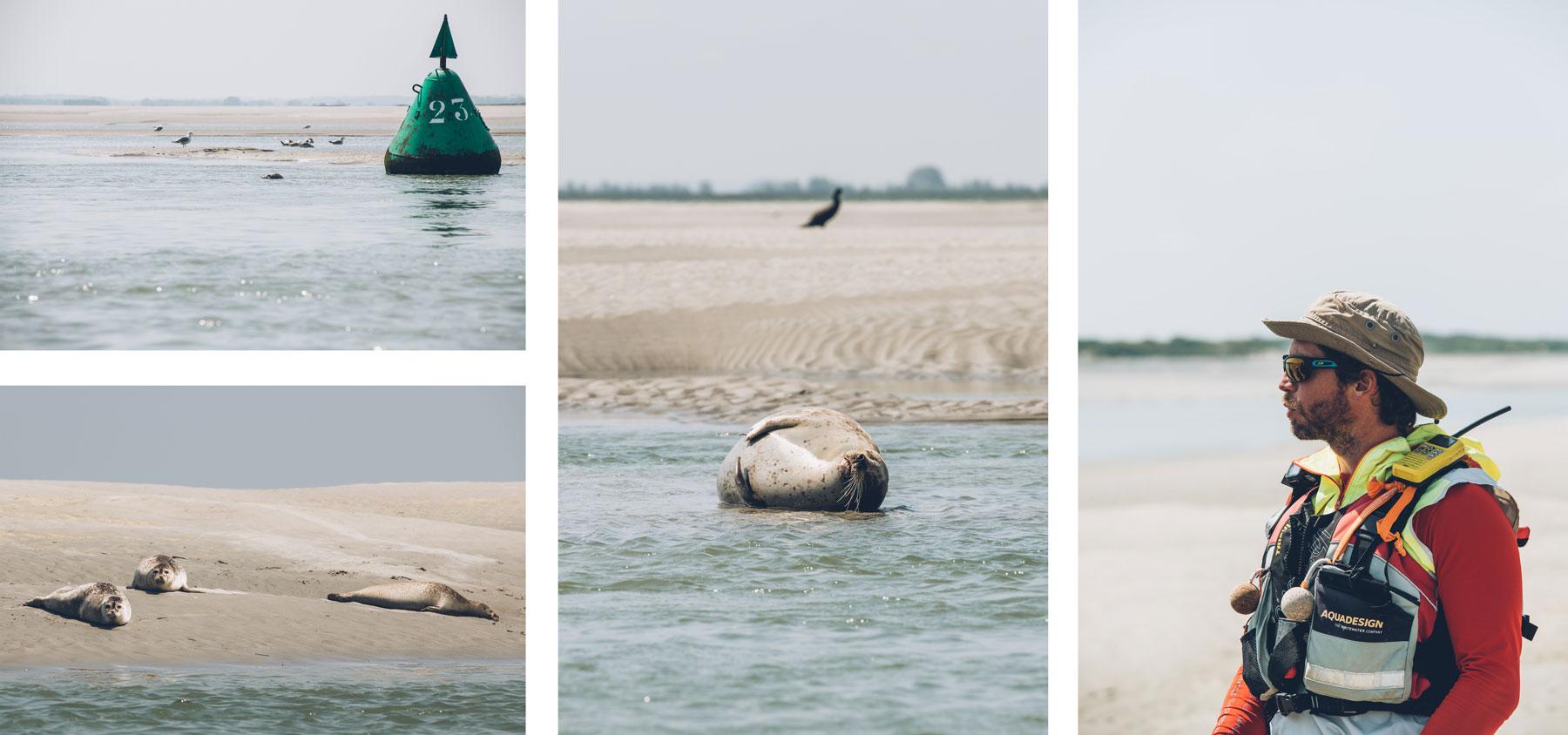 Sortie en Pirogue pour aller voir les phoques, St Valery