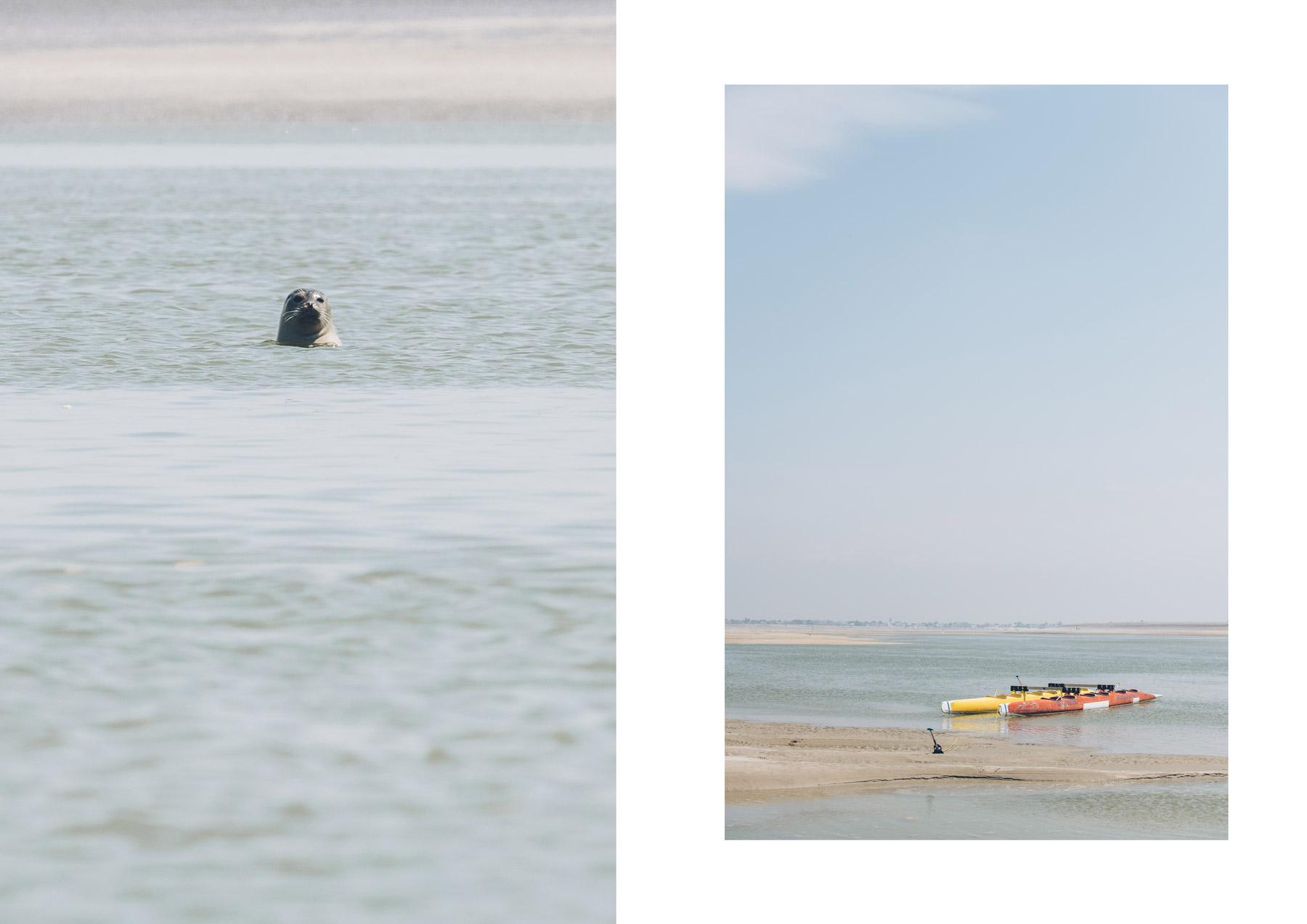 Baie de Somme, sortie en pirogue pour voir les phoques