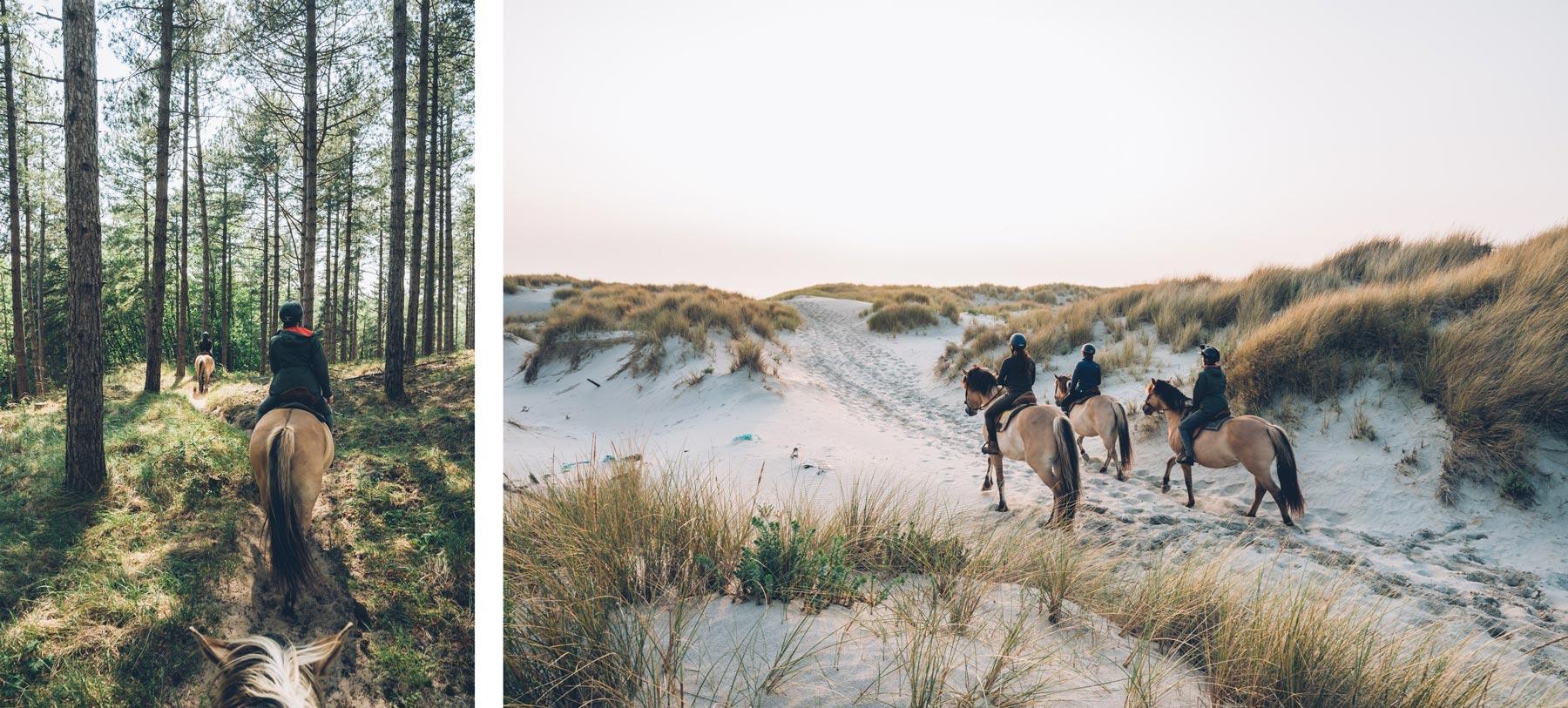 Chevaux Henson dans les dunes de sables