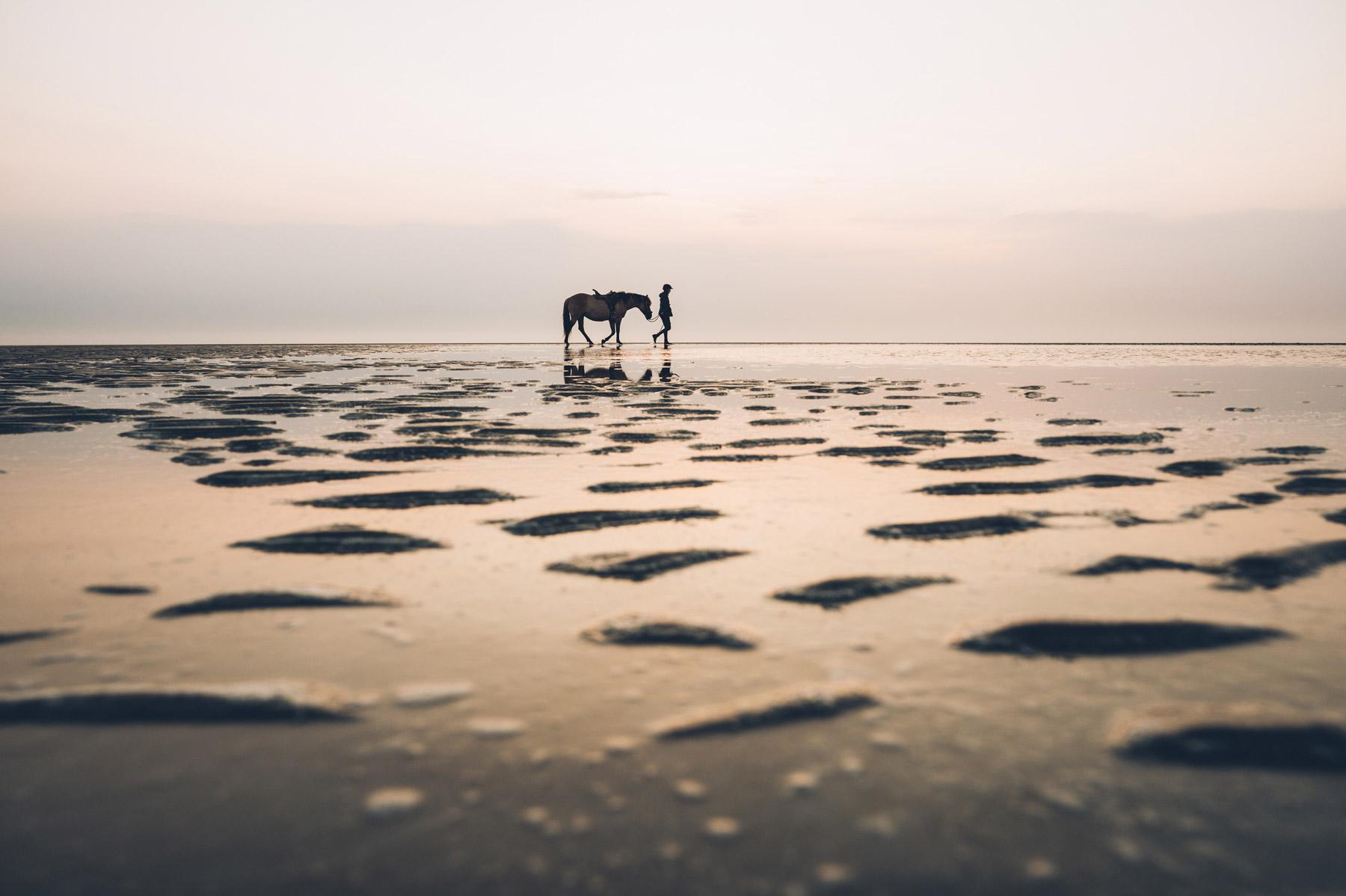 Cheval sur la plage en baie de somme