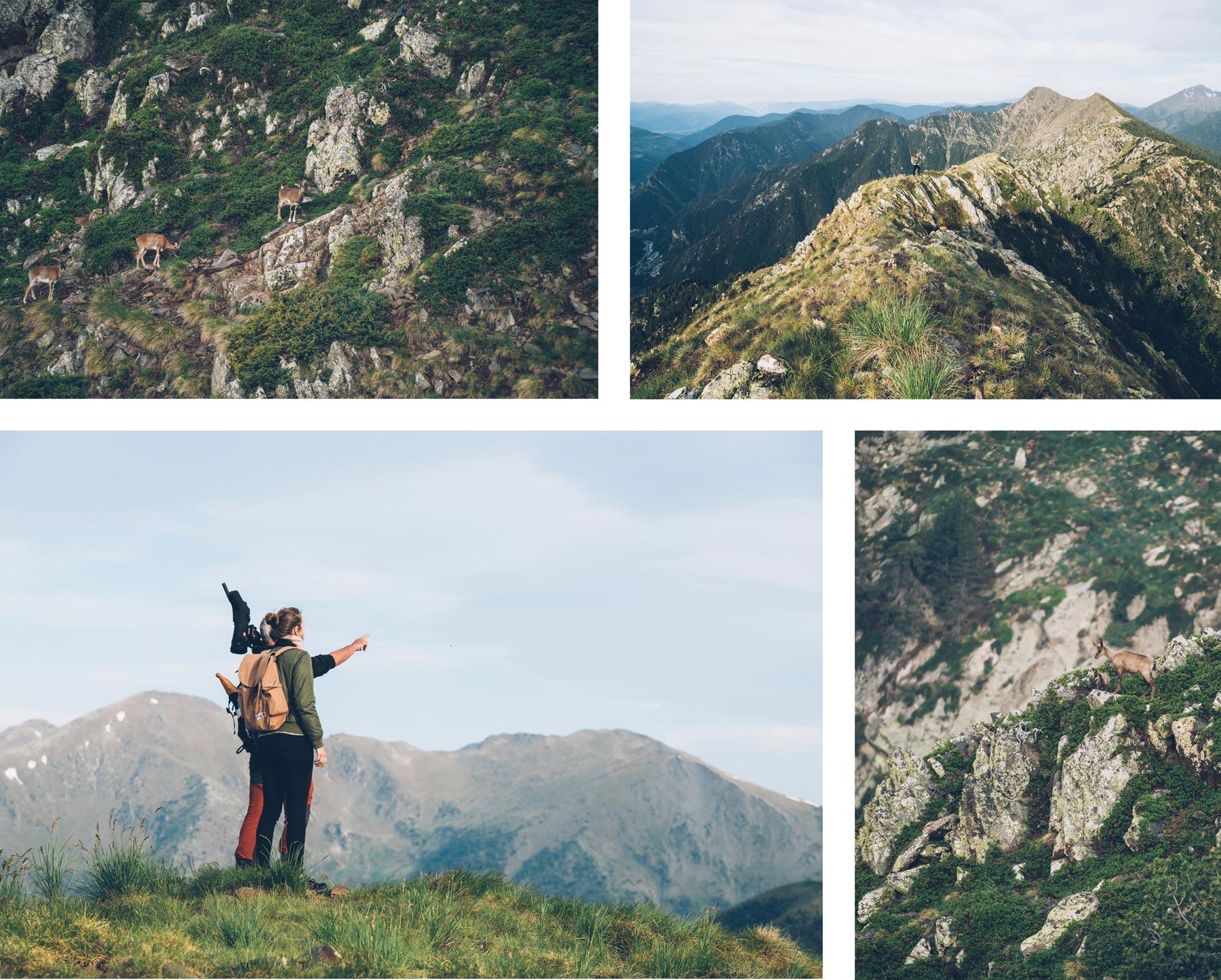 Sortie pour voir des Chamois à Andorre