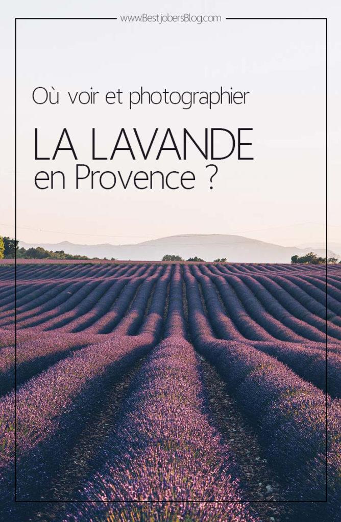Où voir la Lavande en Provence?