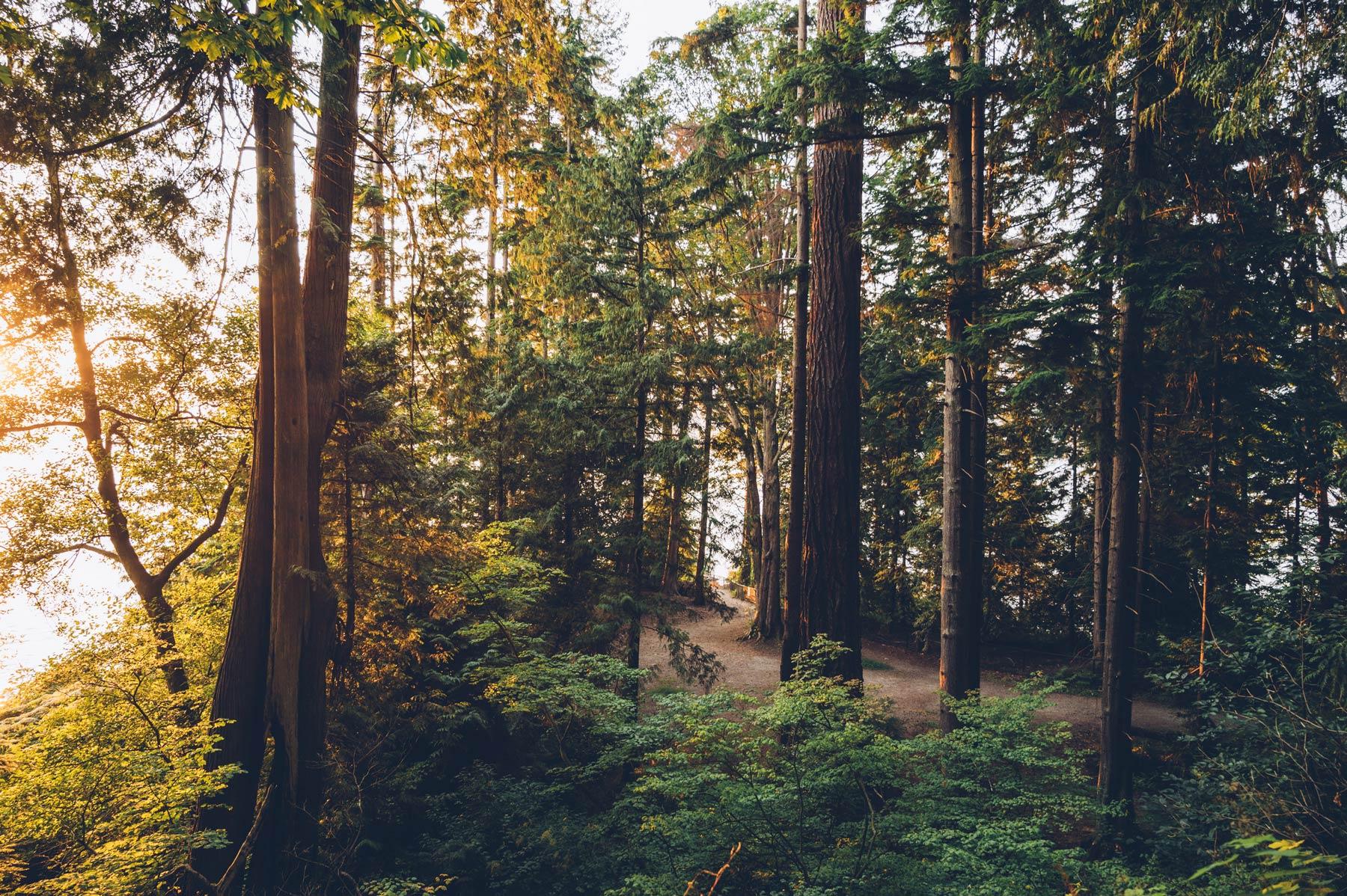 Forêt Stanley Park, Vancouver