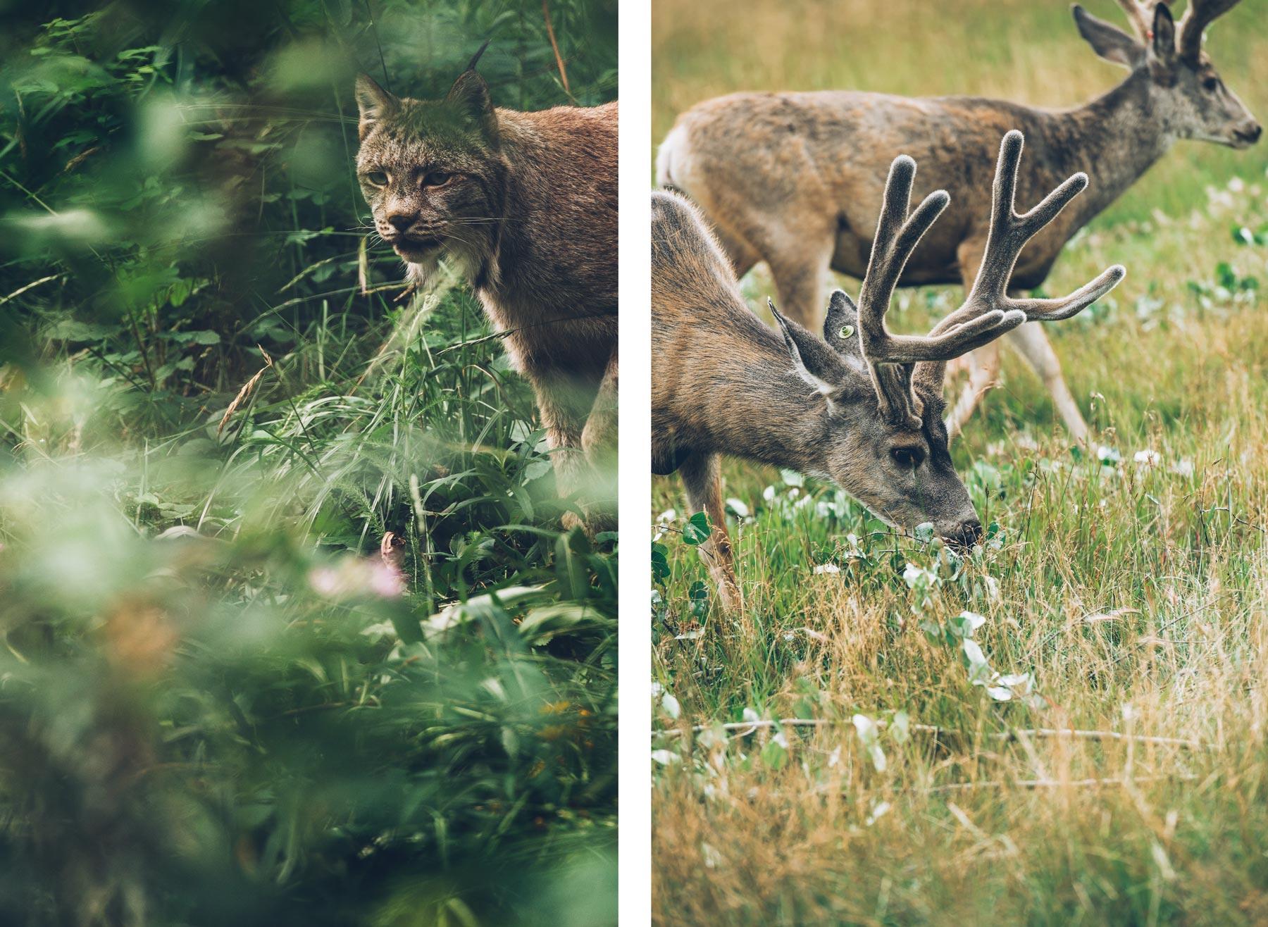 Yukon Wildlife Preserve