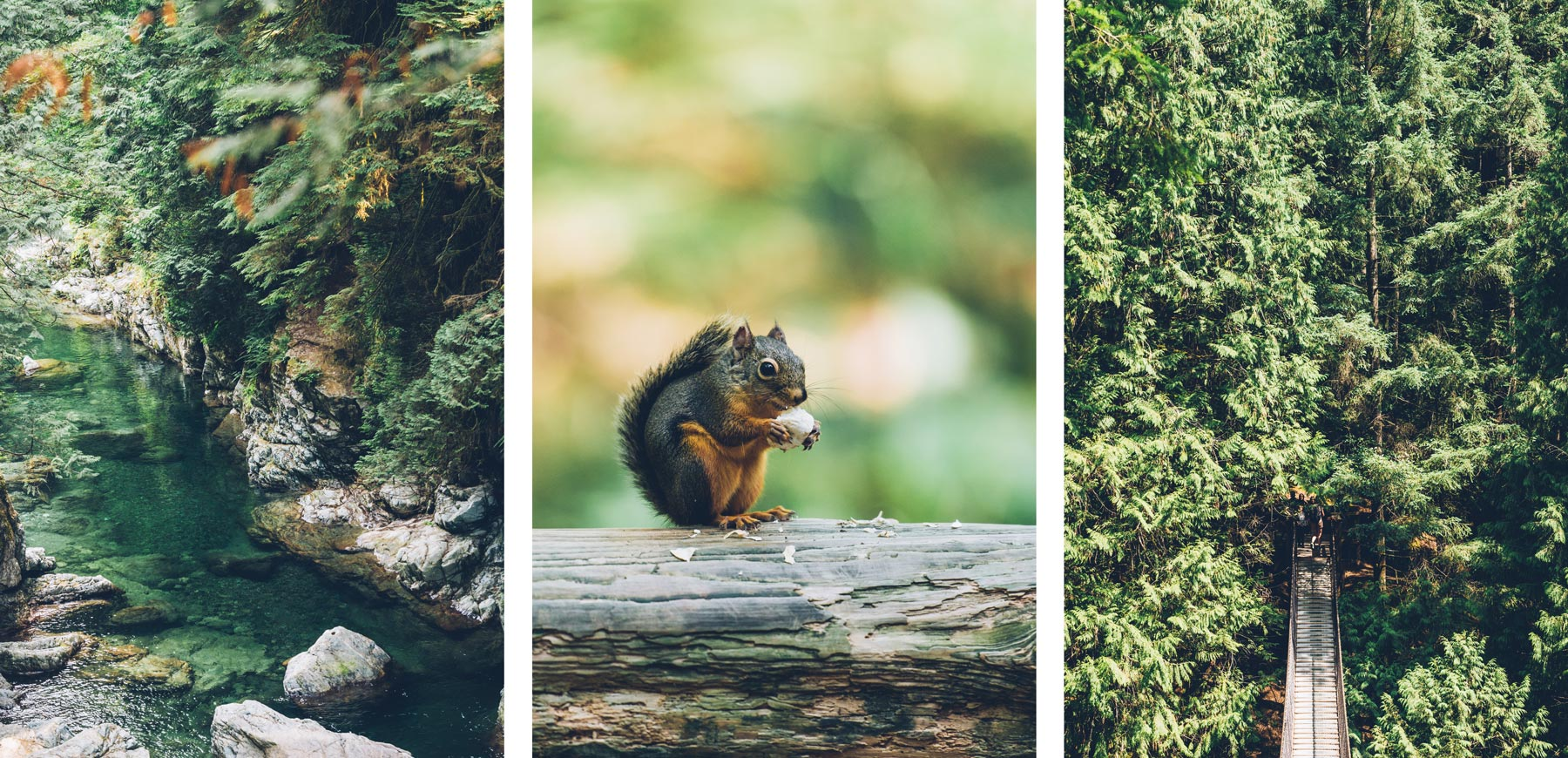 Lynn Canyon, Blog Voyage