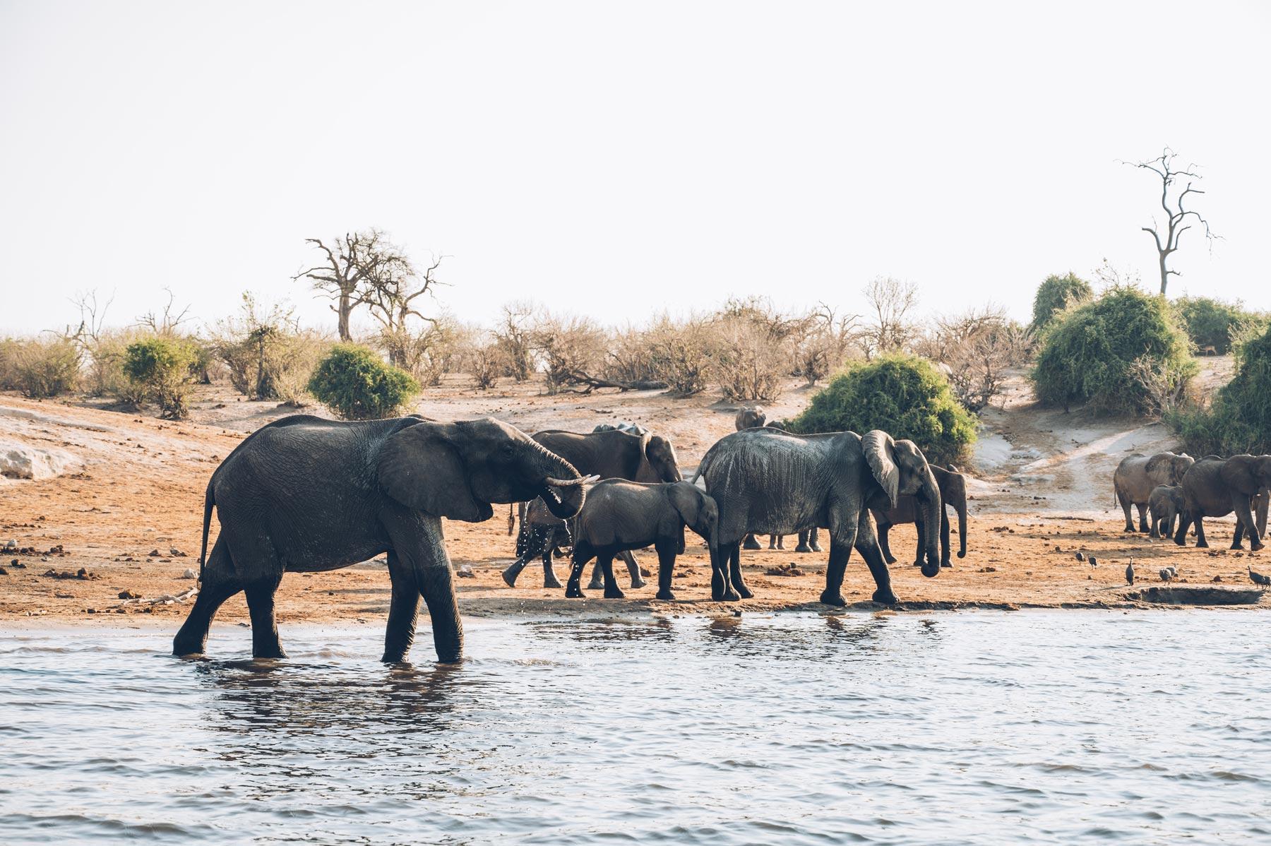 Croisière au Botswana, Croisieurope