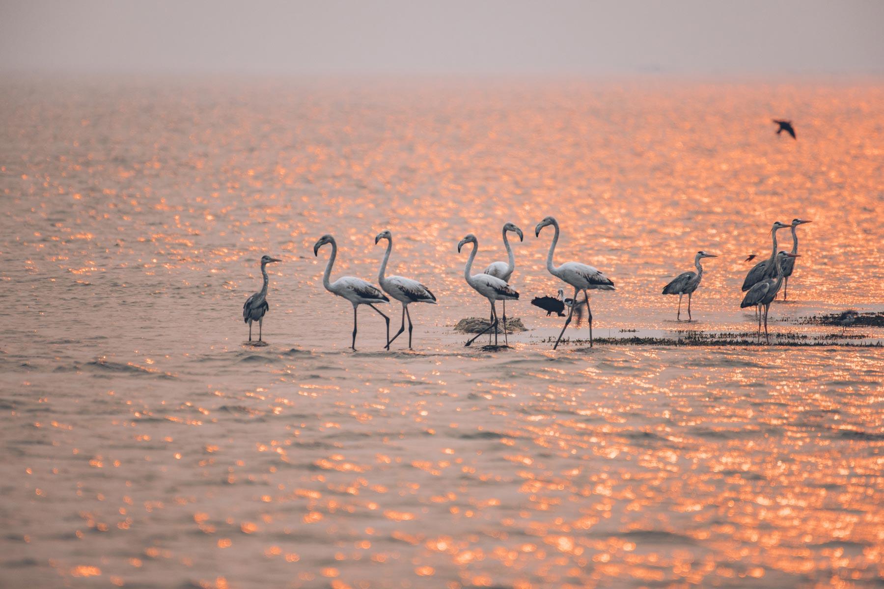 Lac Kariba, Zimbabwe