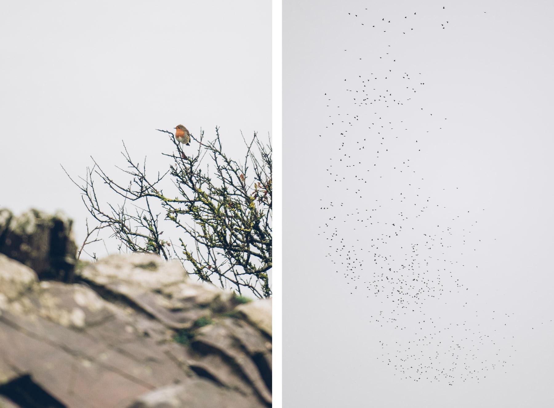 Sortie Nature observation des oiseaux