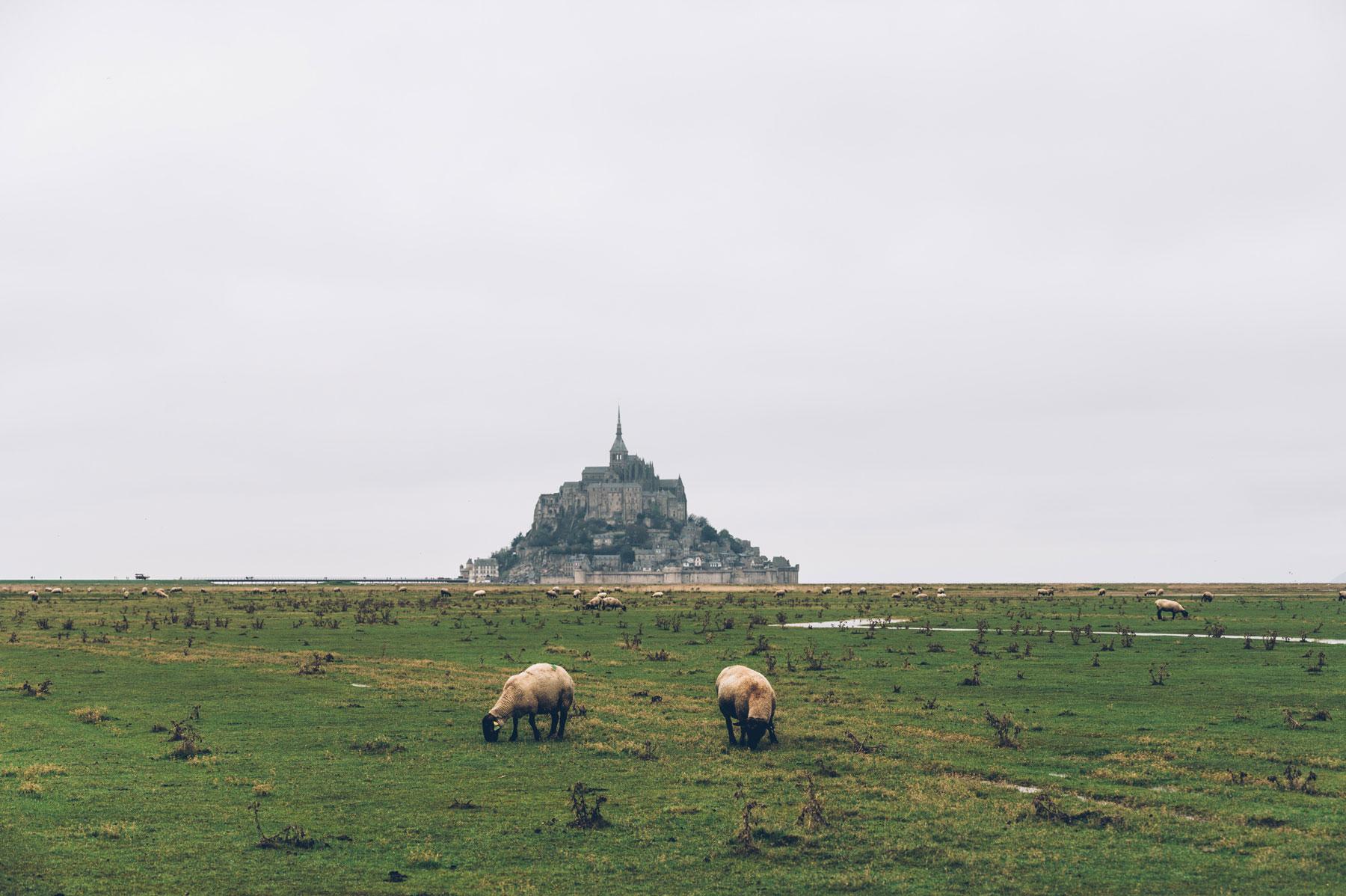 Moutons et Mont