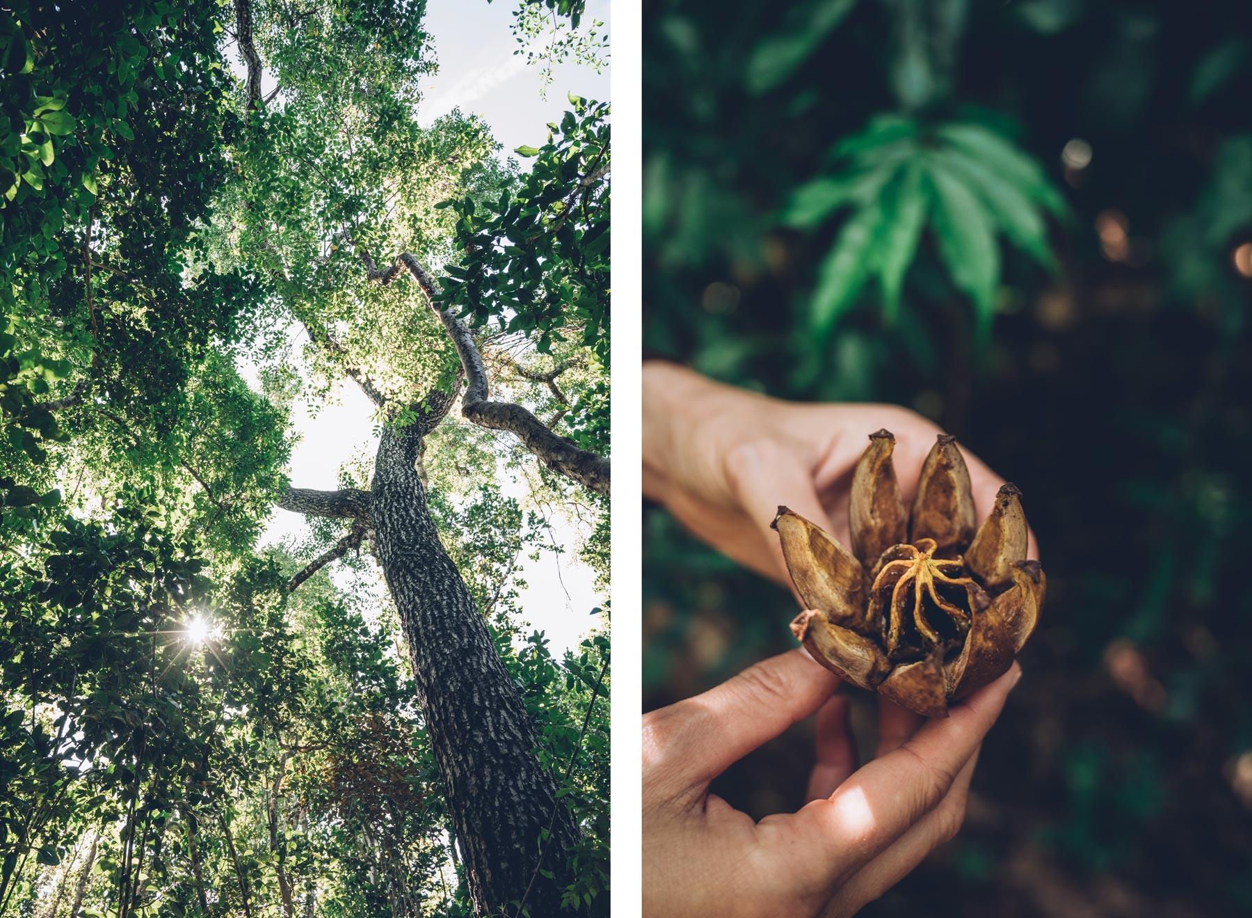 Primeval Forest, New Providence, Nassau