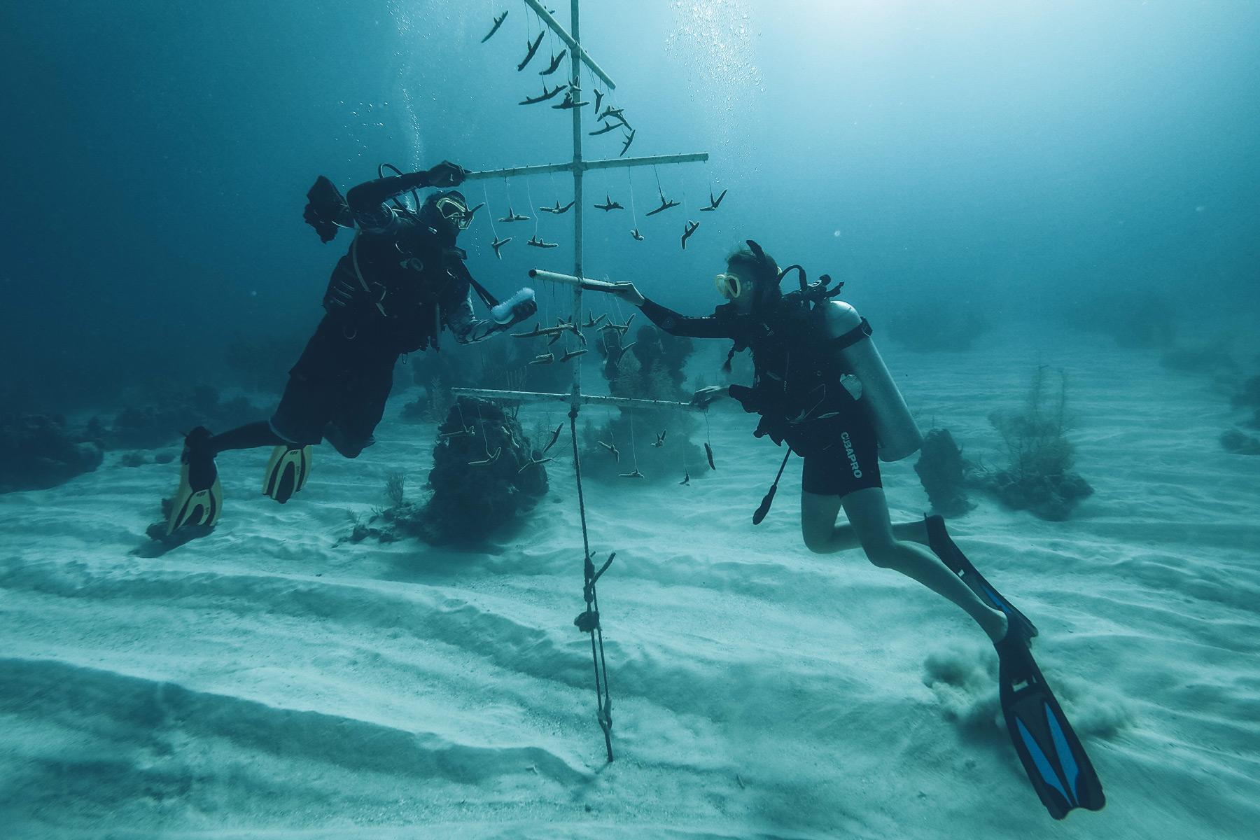 Plantation de Corail aux Bahamas, Andros